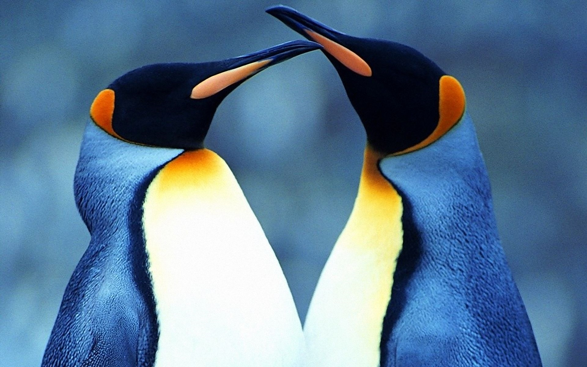penguin 1080