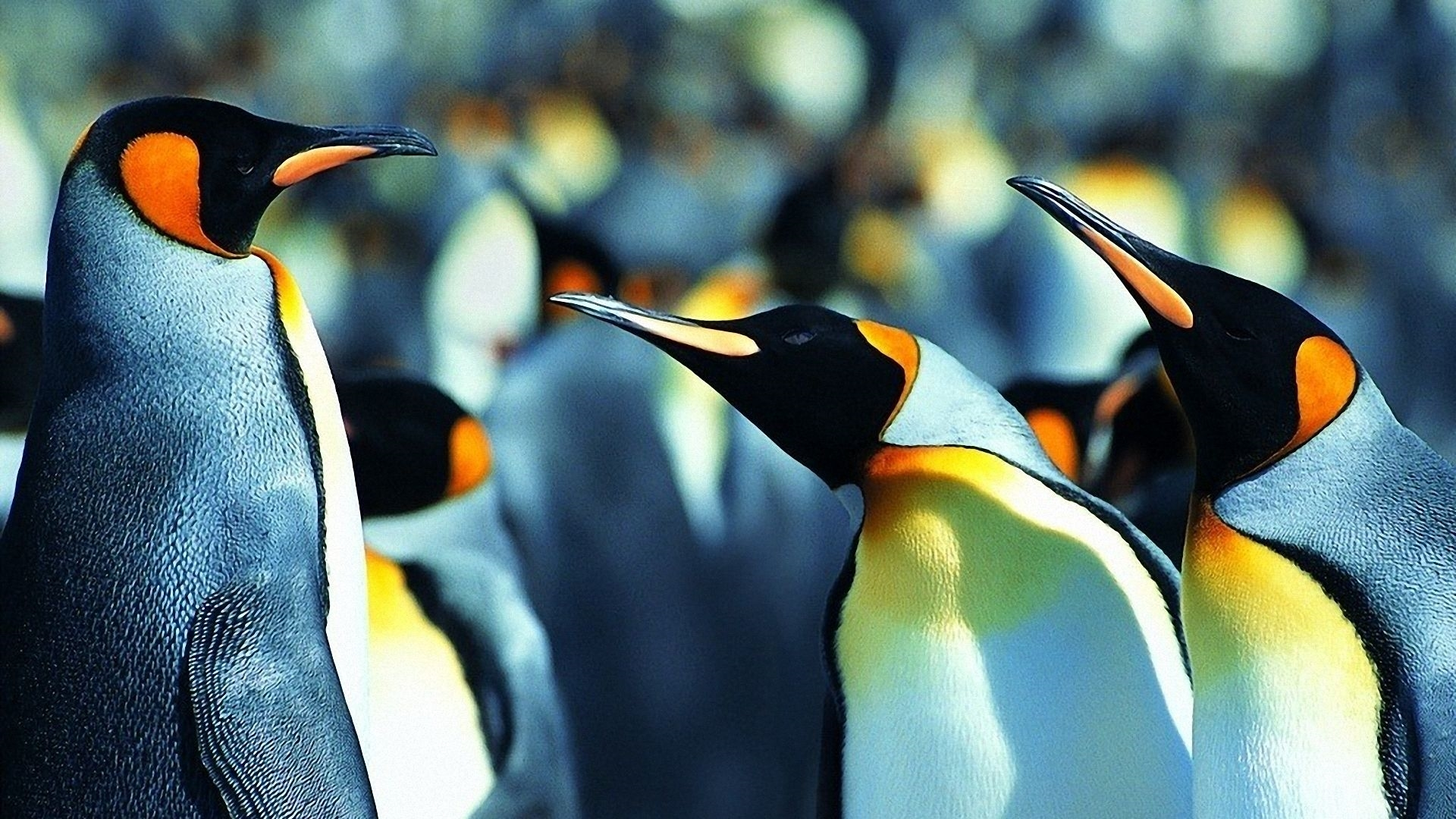 penguin download wallpaper