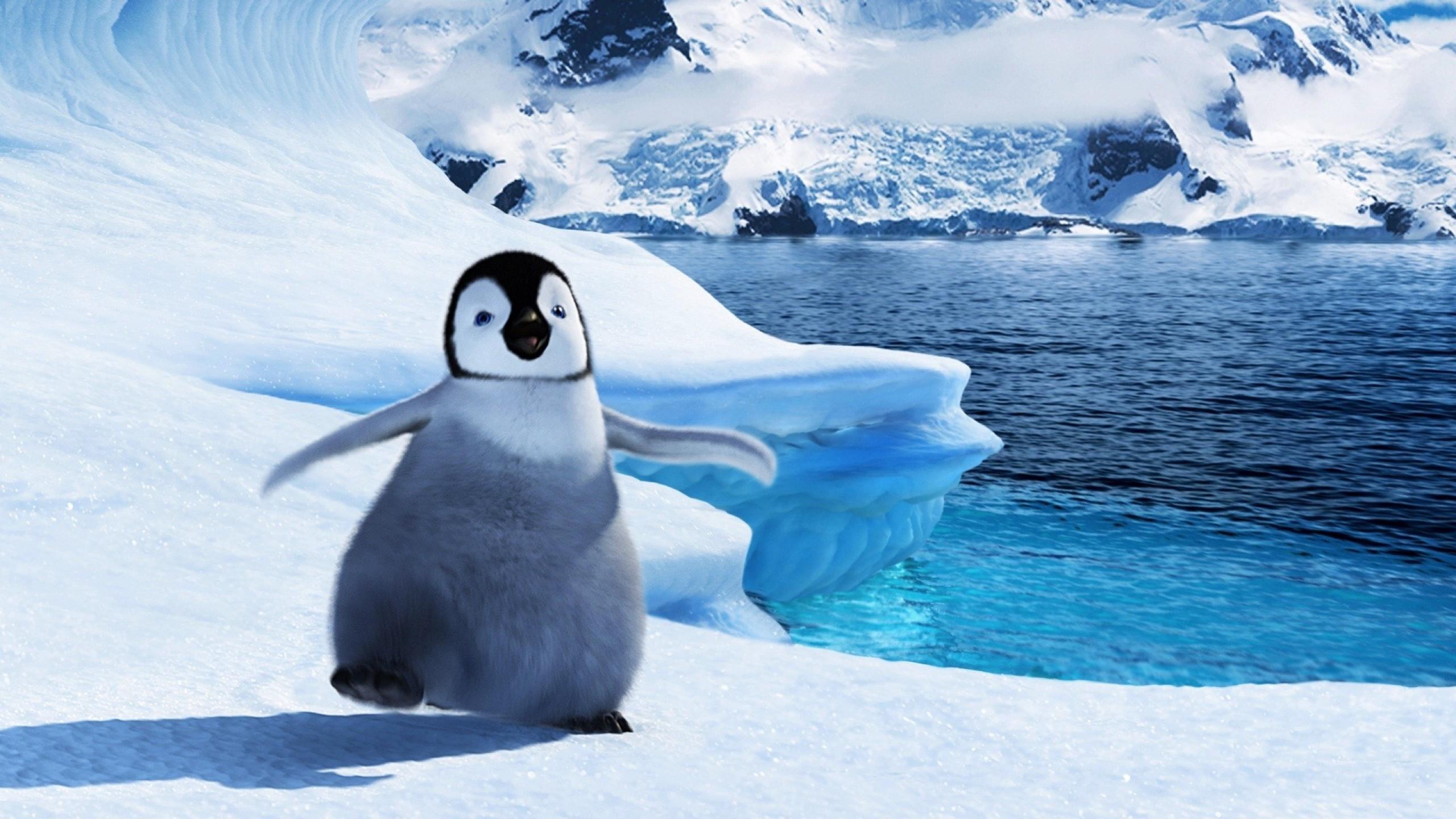 penguin new photos