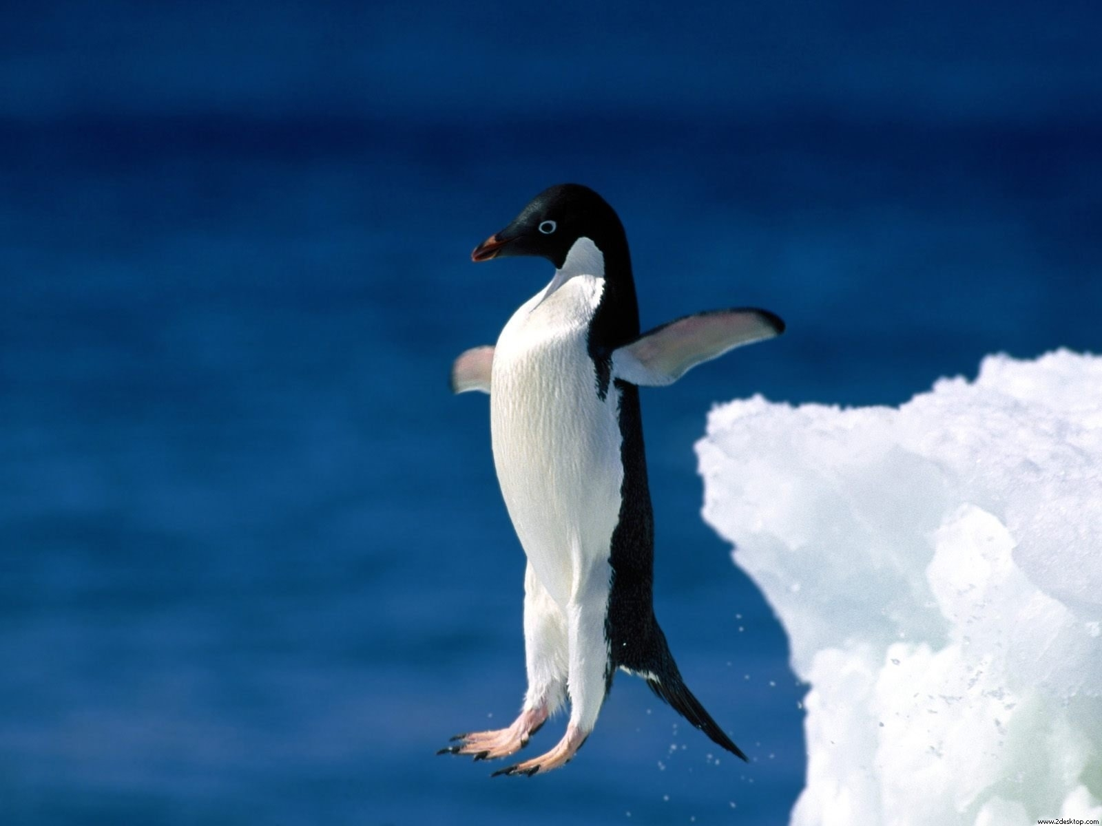 penguin pc wallpapers