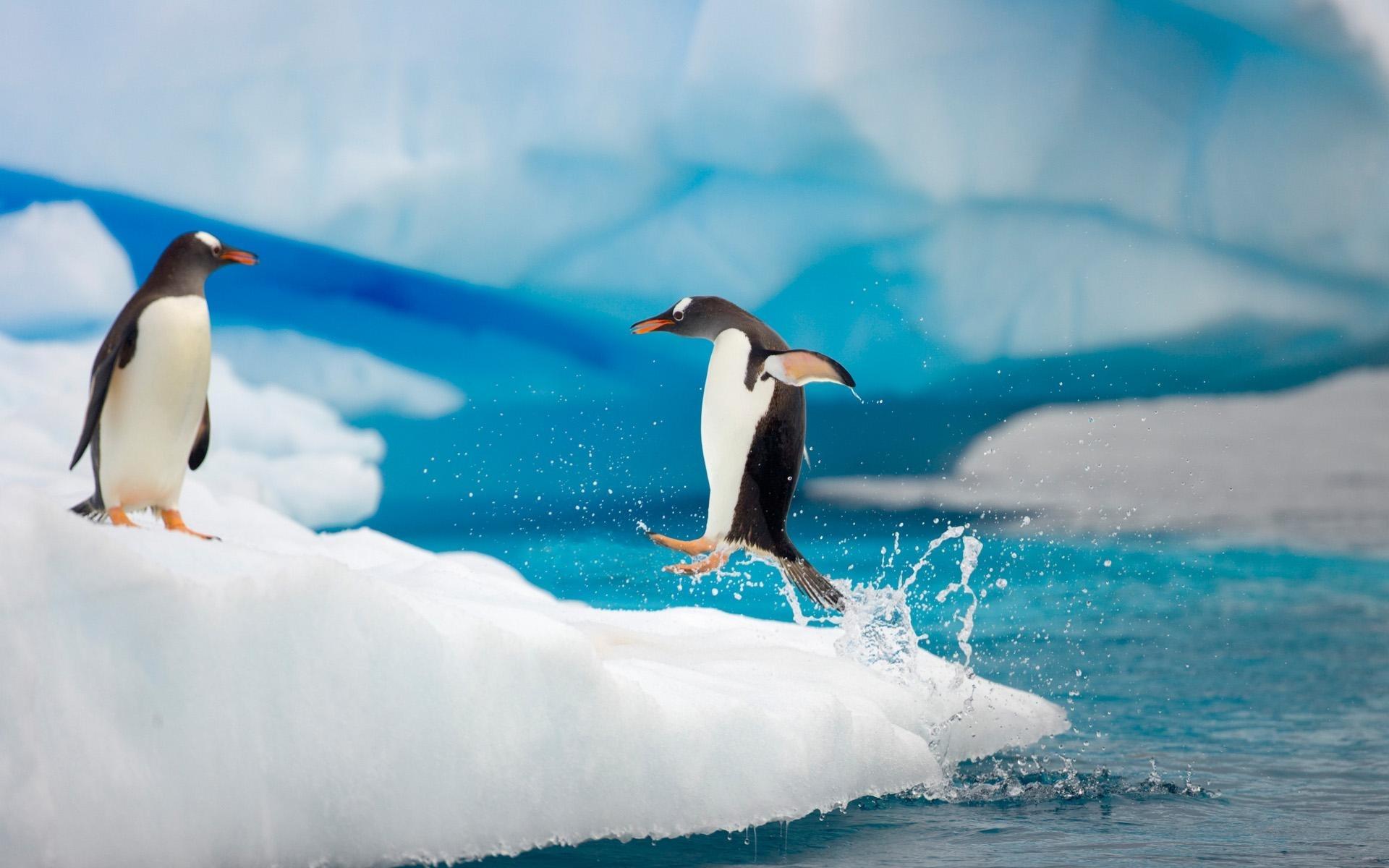 penguin wallpapers for deskto