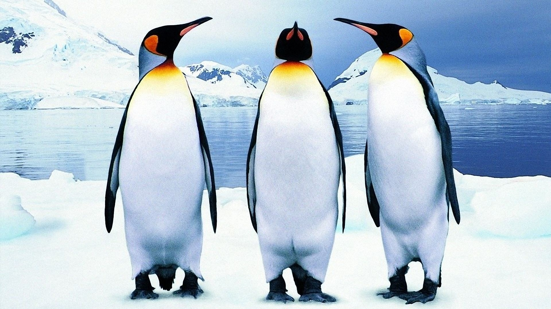 penguin wallpapers for iphone