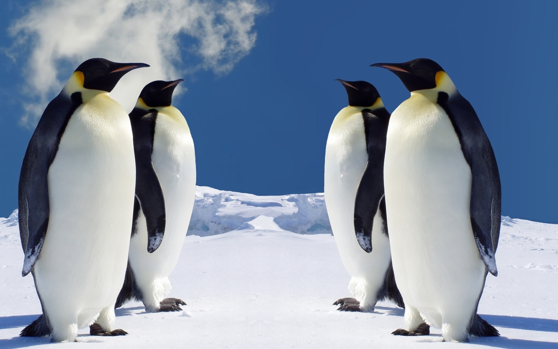 penguin widescreen
