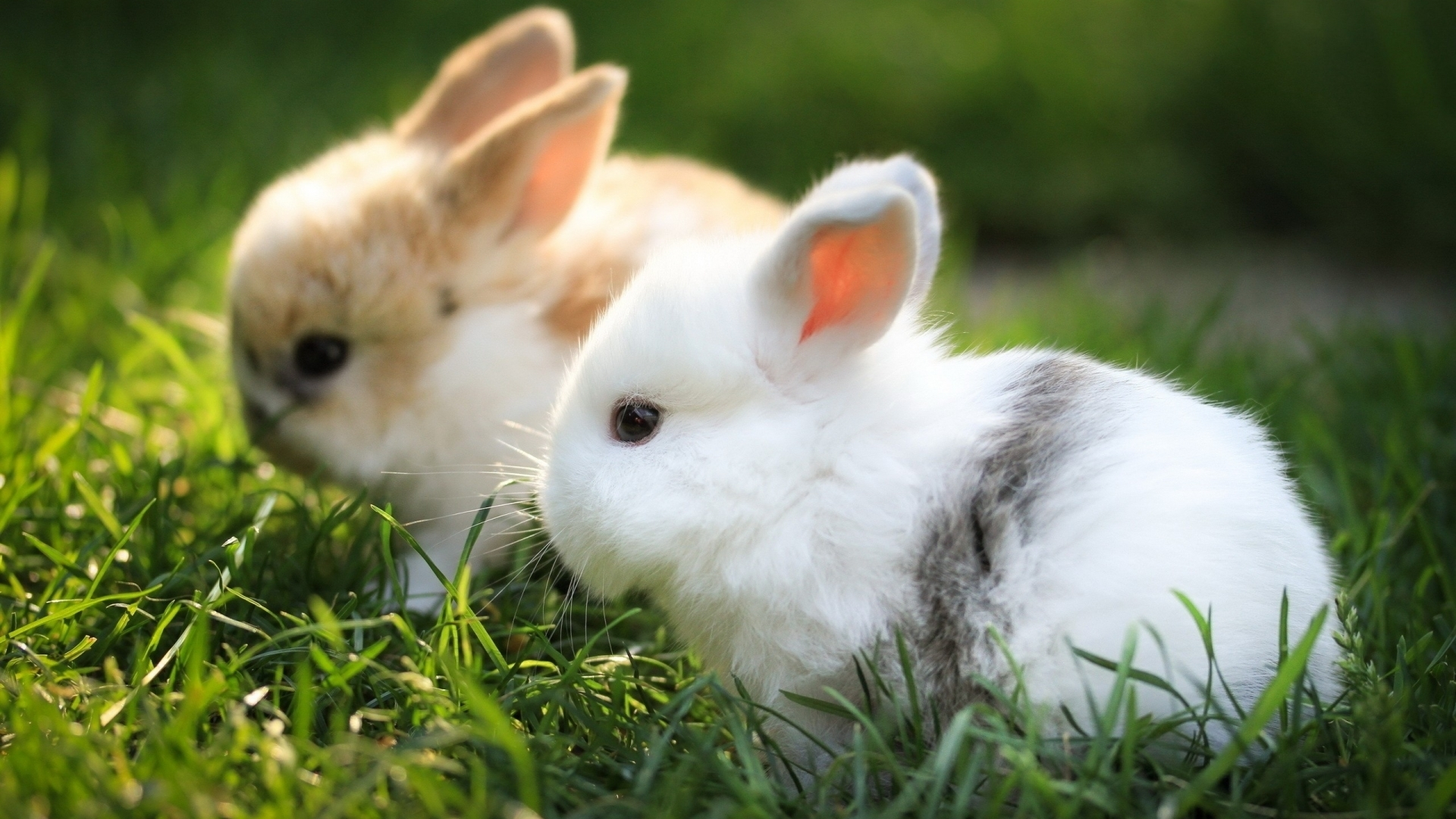 rabbit download wallpaper