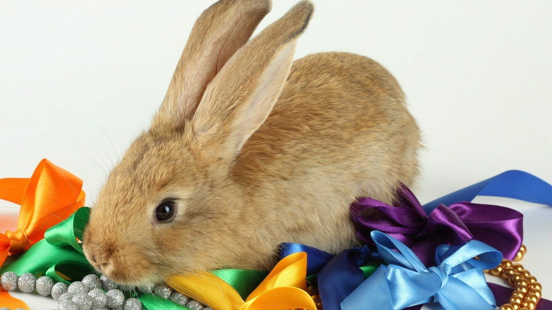 rabbit free