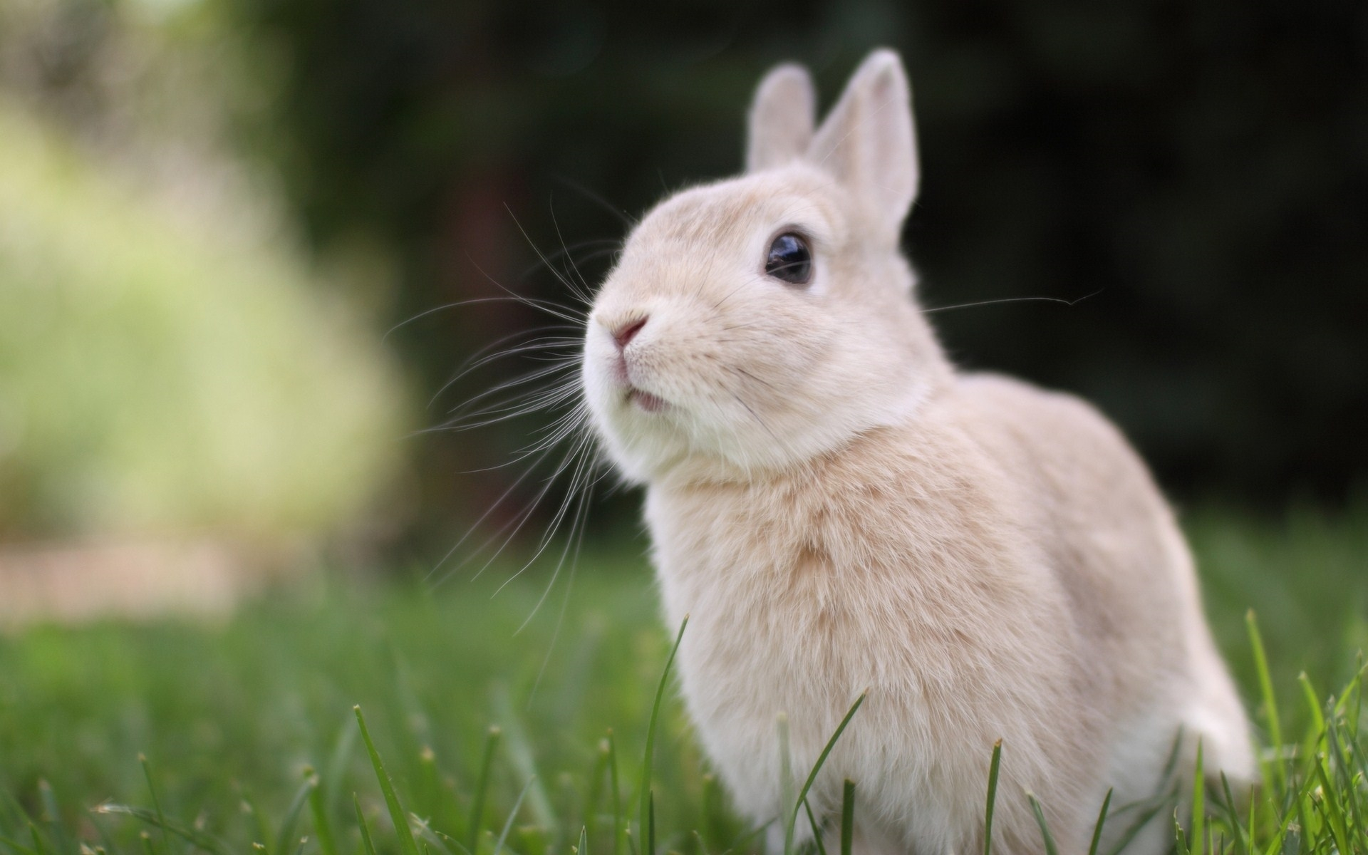 rabbit full hd