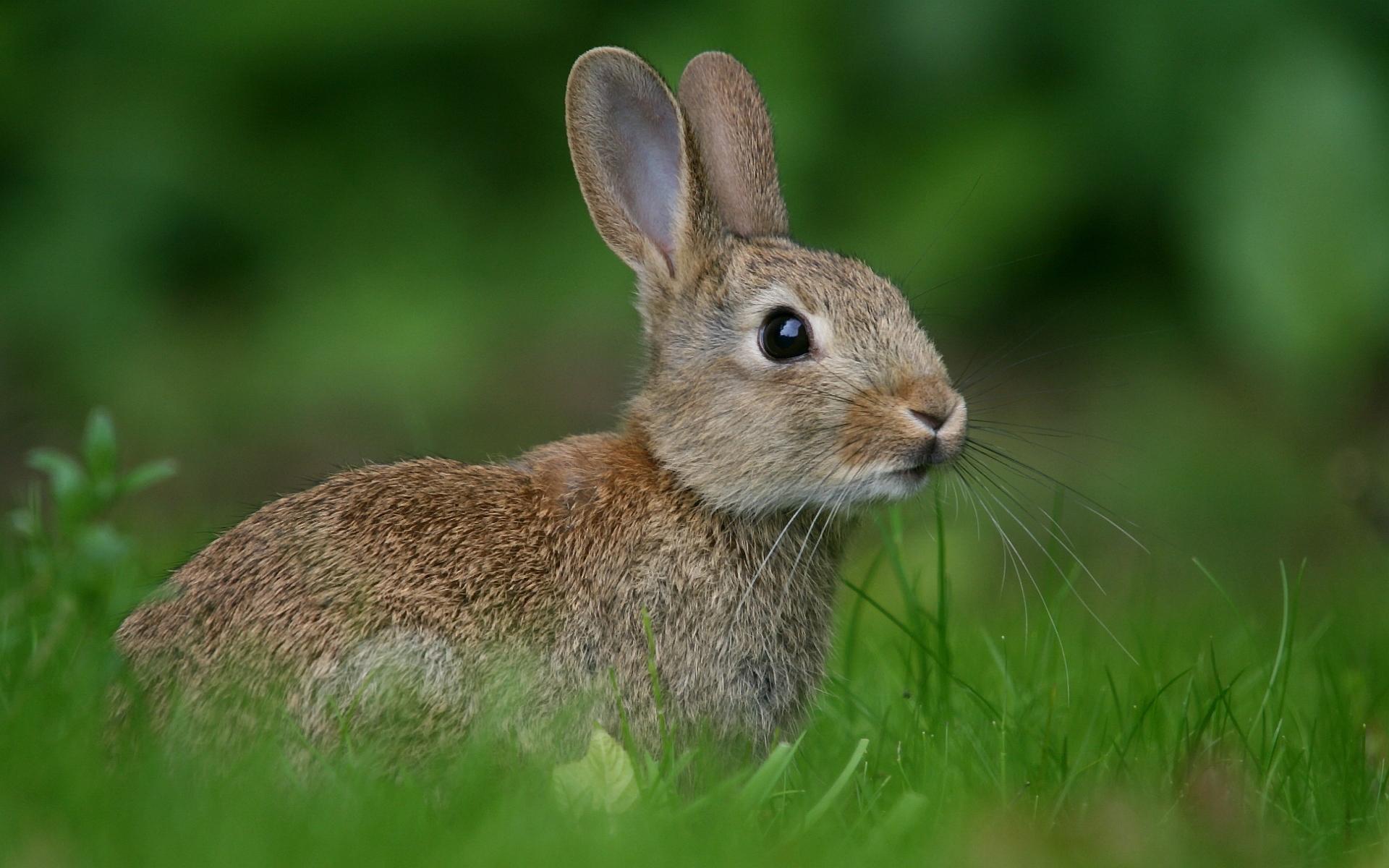 rabbit hd photos