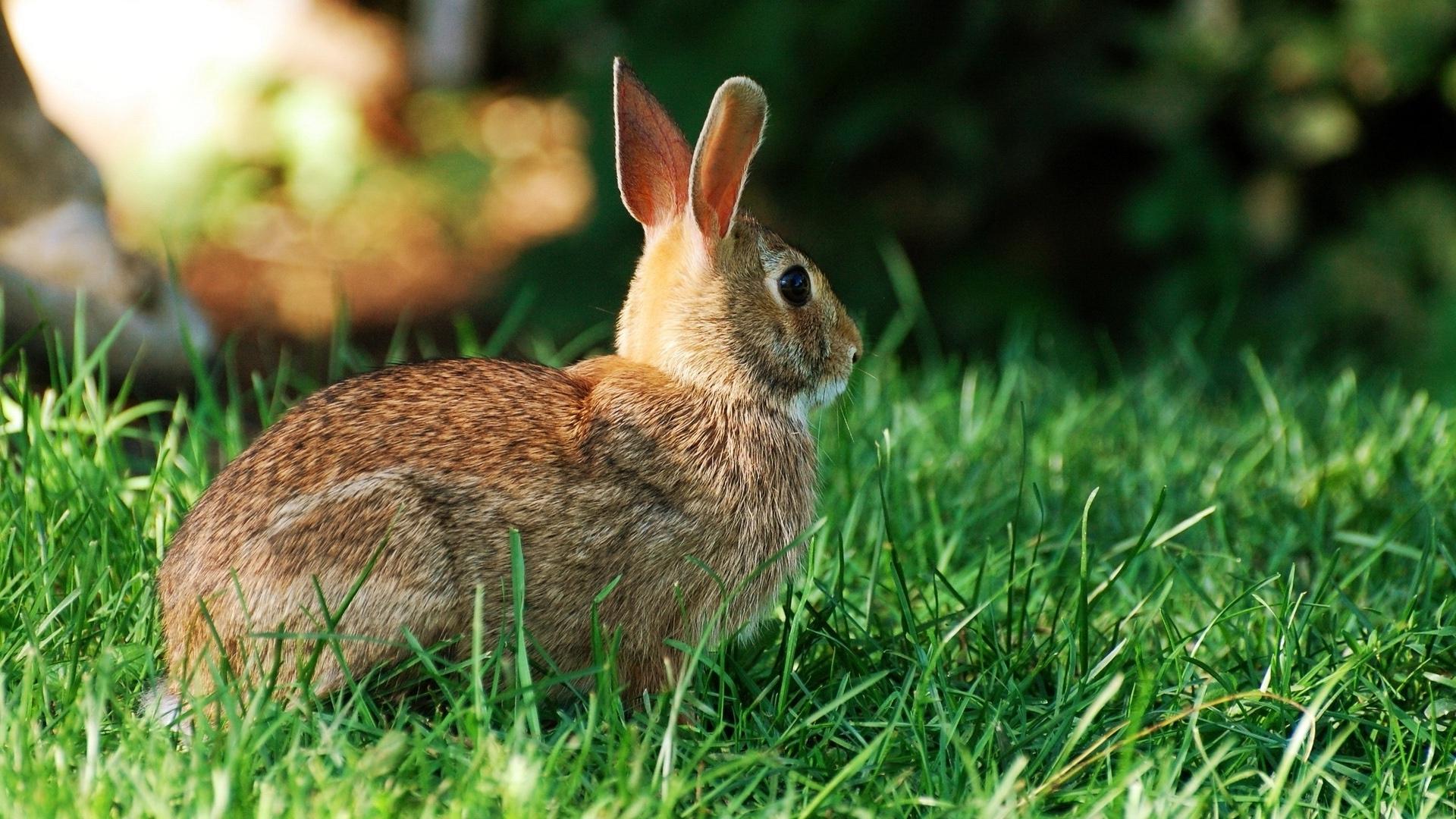 rabbit hd pics
