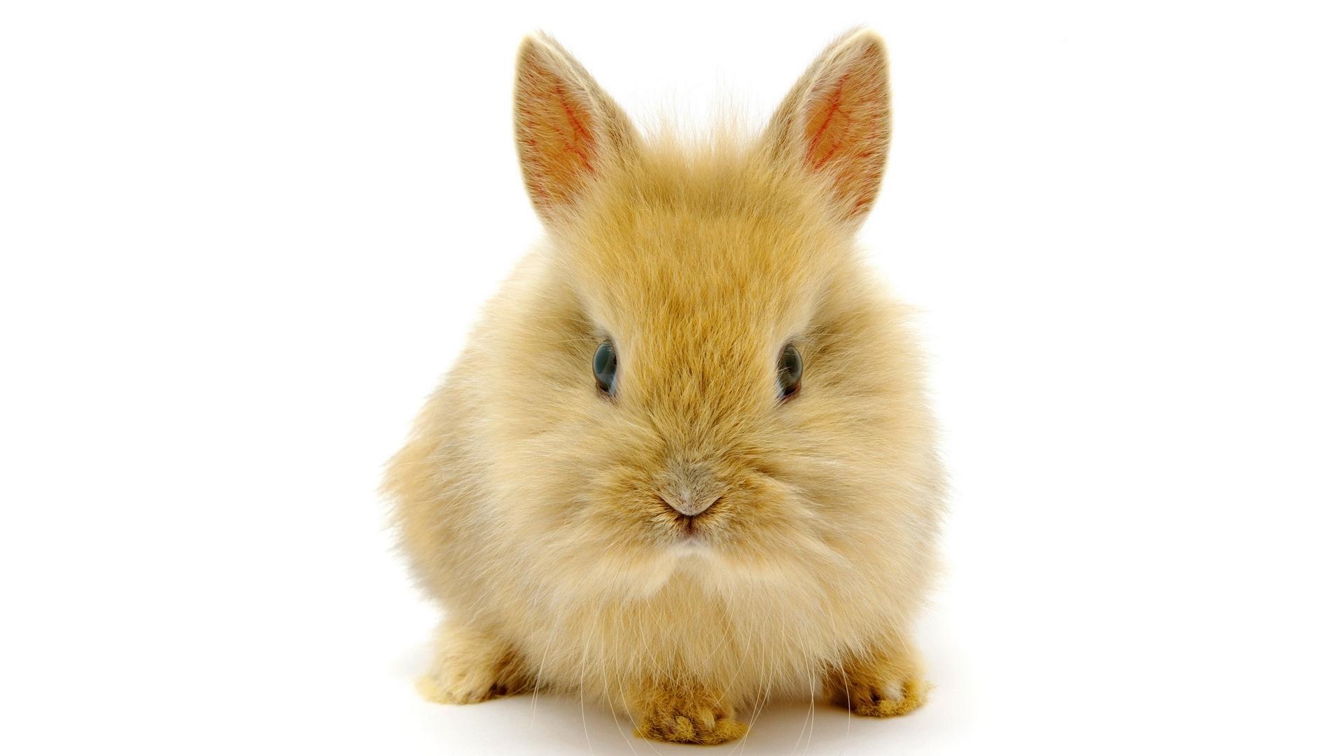 rabbit pic