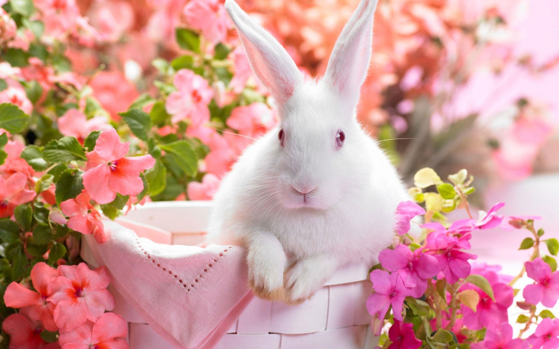 rabbit pics