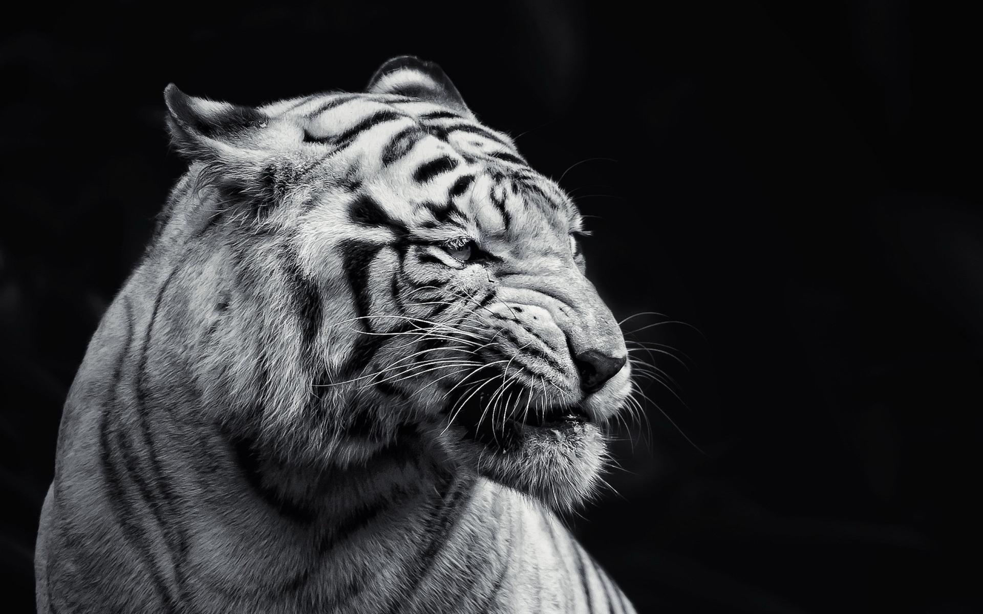 tiger 1080