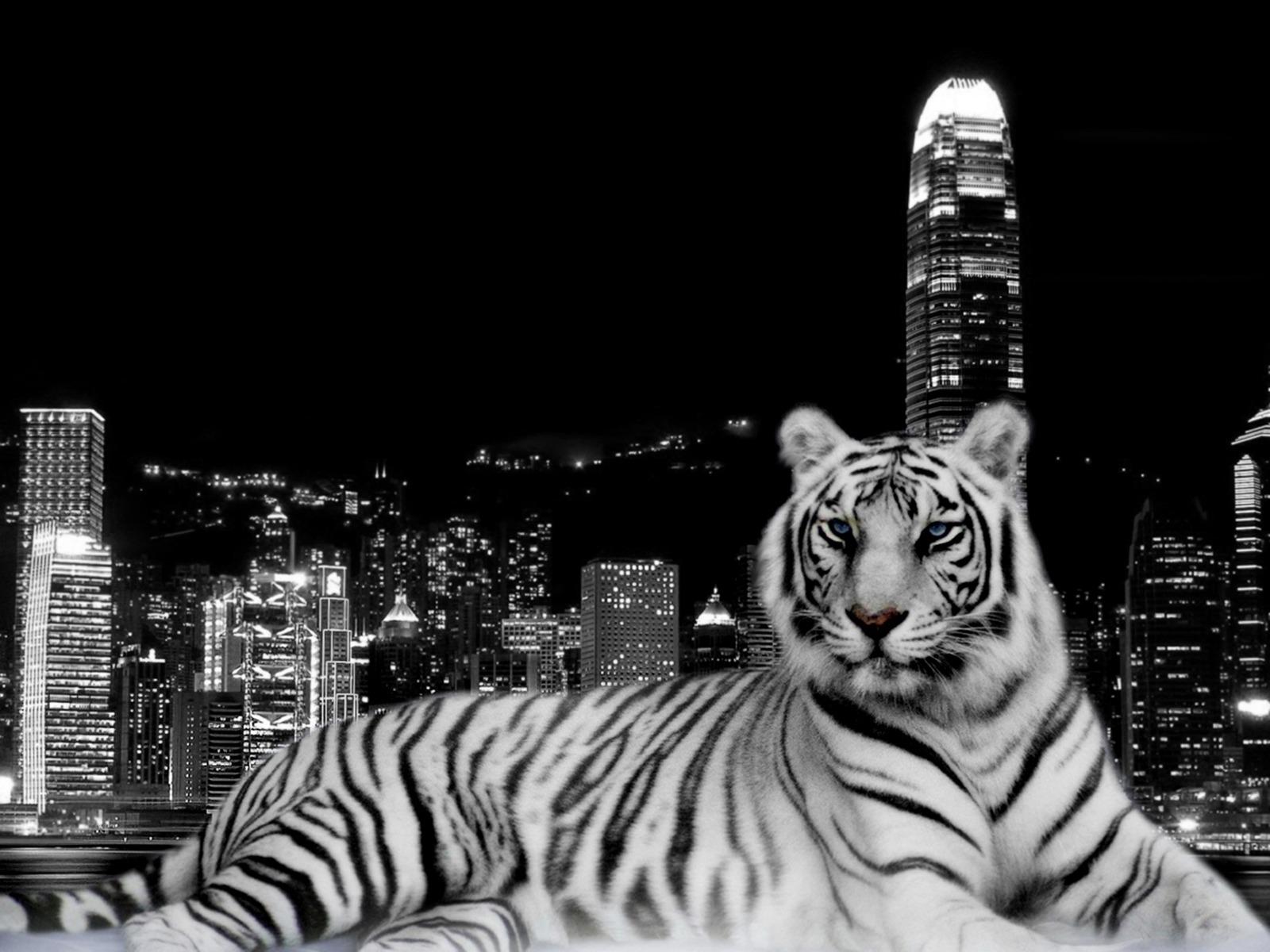 tiger deskto