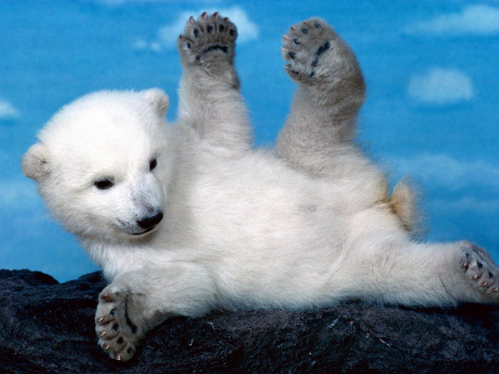 white bear 1080