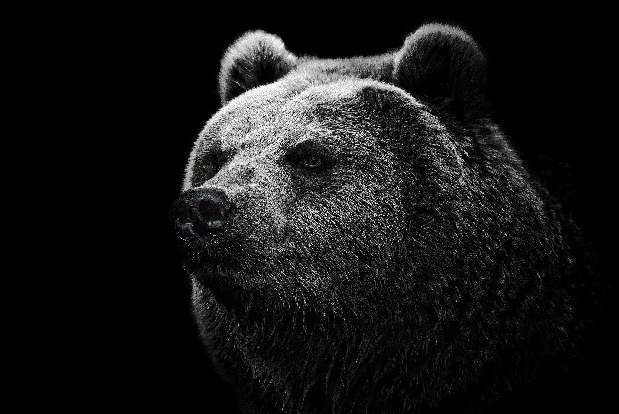 white bear download wallpaper