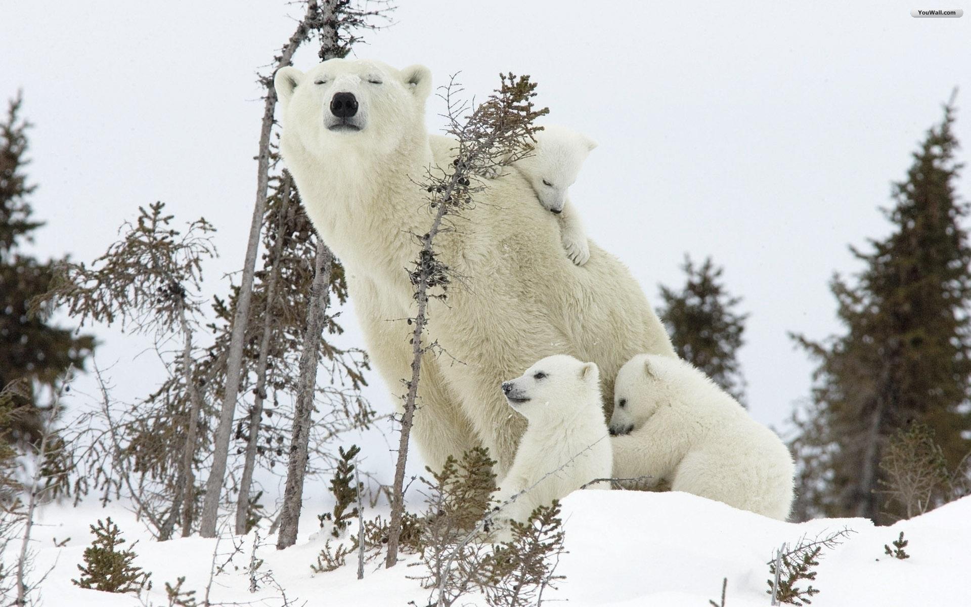 white bear download