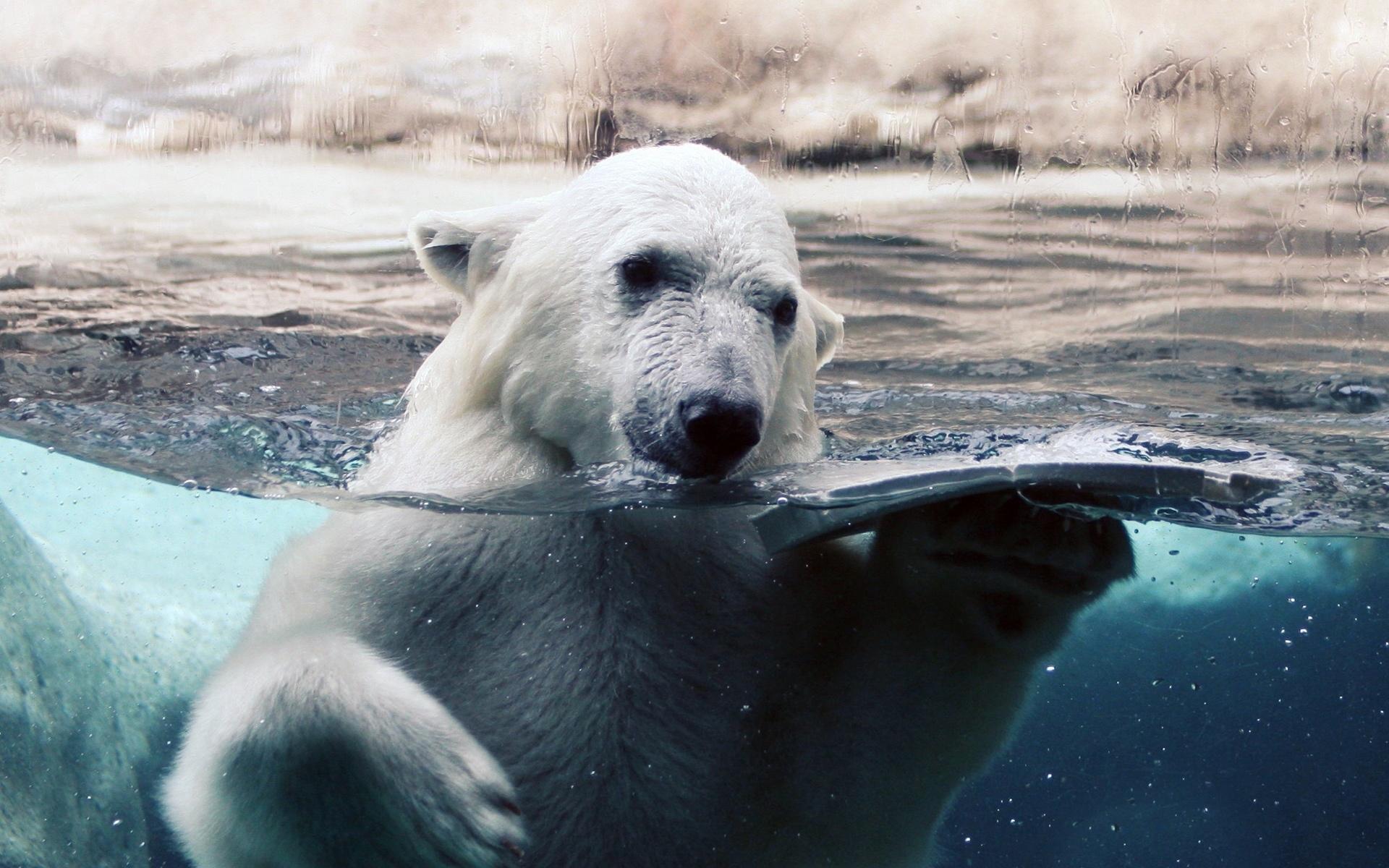 white bear free download