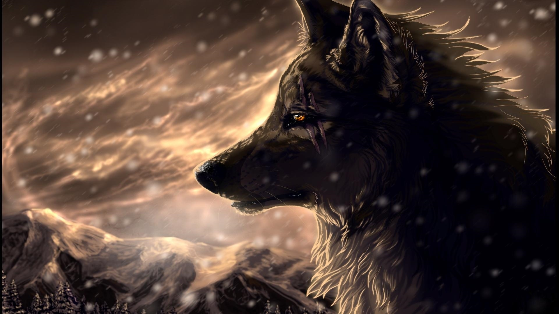 wolf download wallpaper