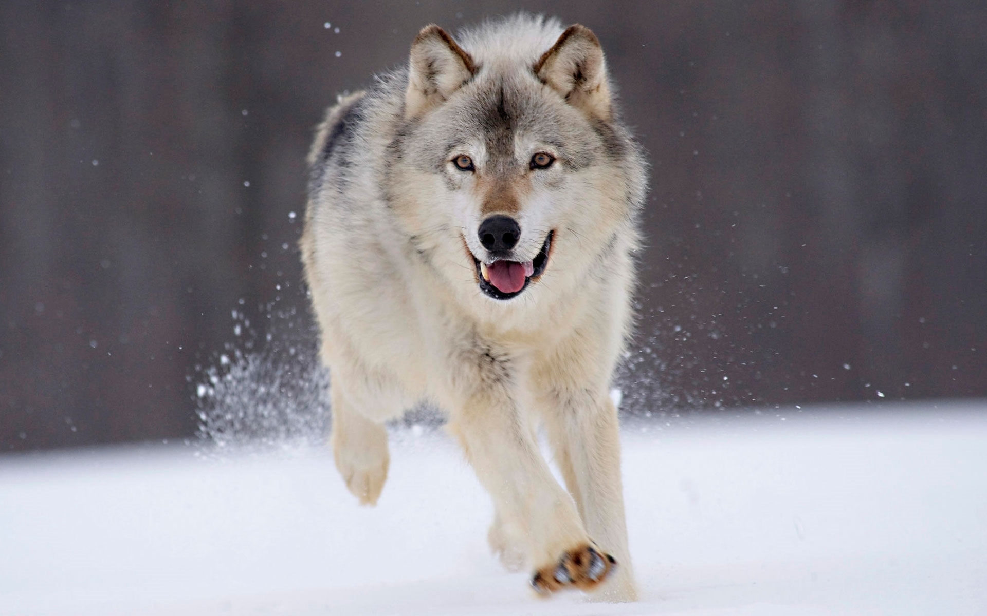 wolf new photos