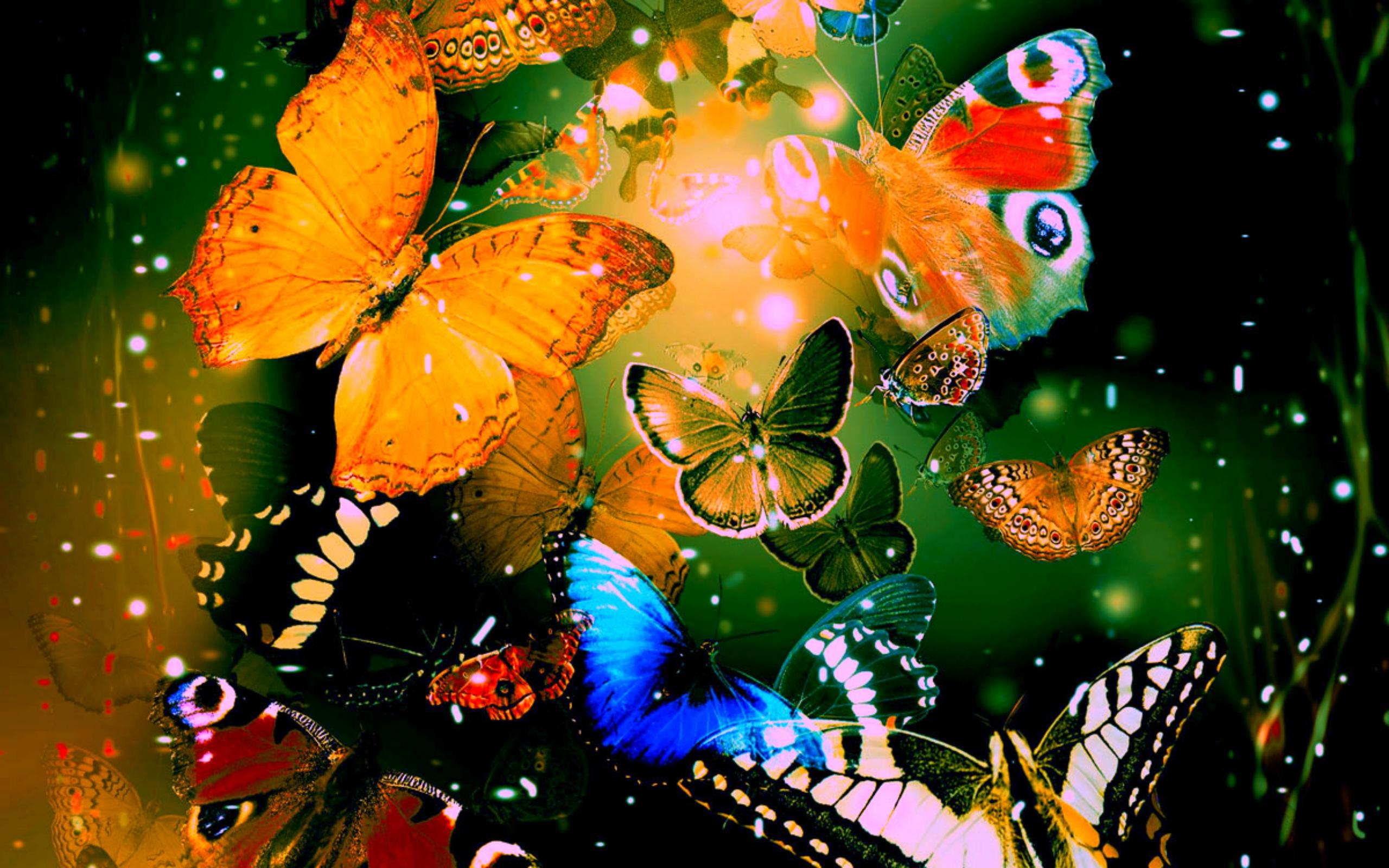 butterflies 1080