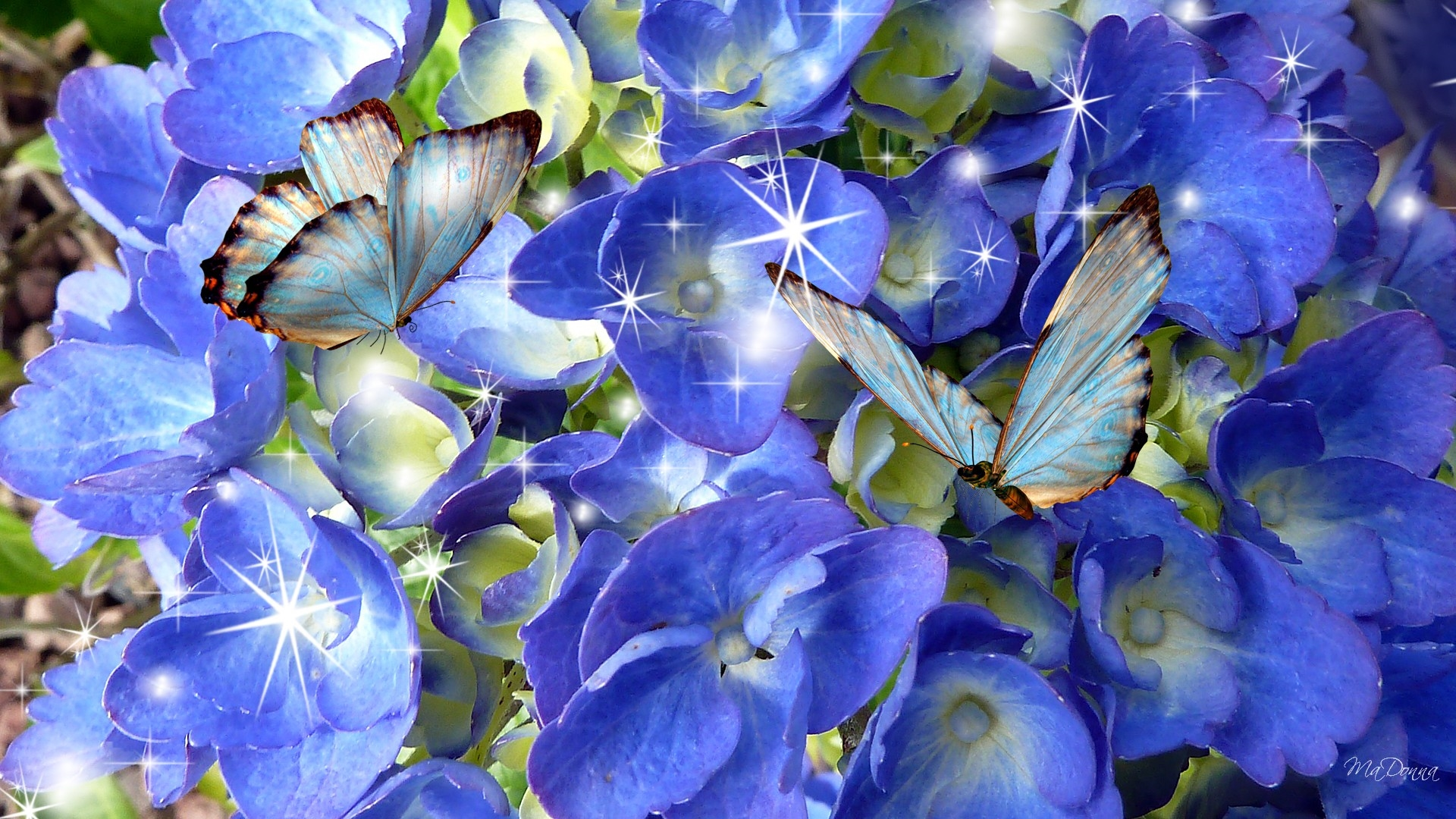 butterflies desktop wallpaper