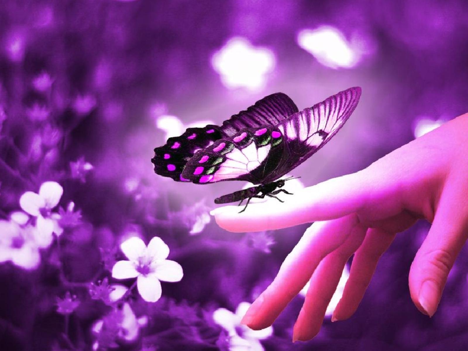 butterflies free download