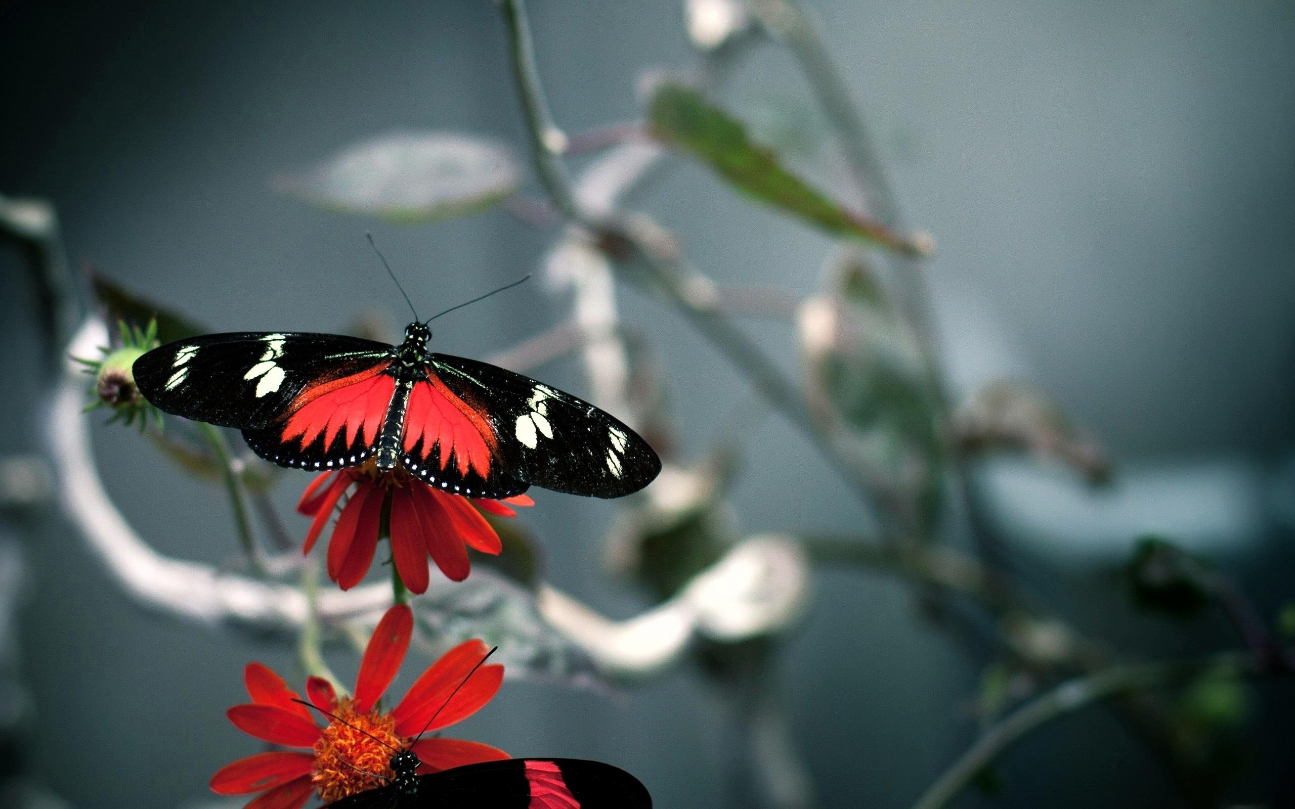 butterflies free wallpapers