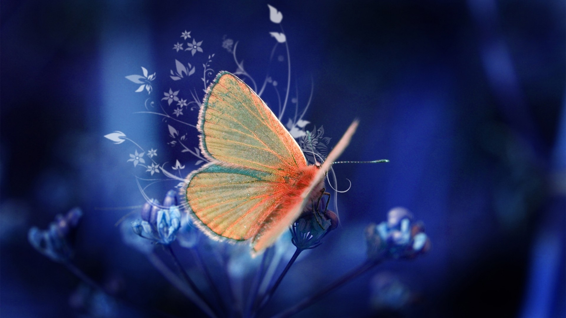 butterflies hd background