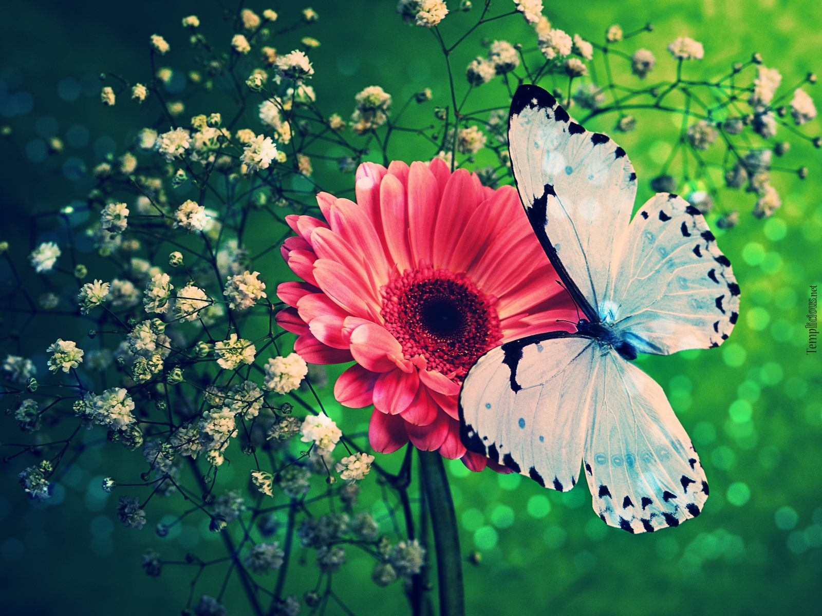 butterflies high definition wallpapers