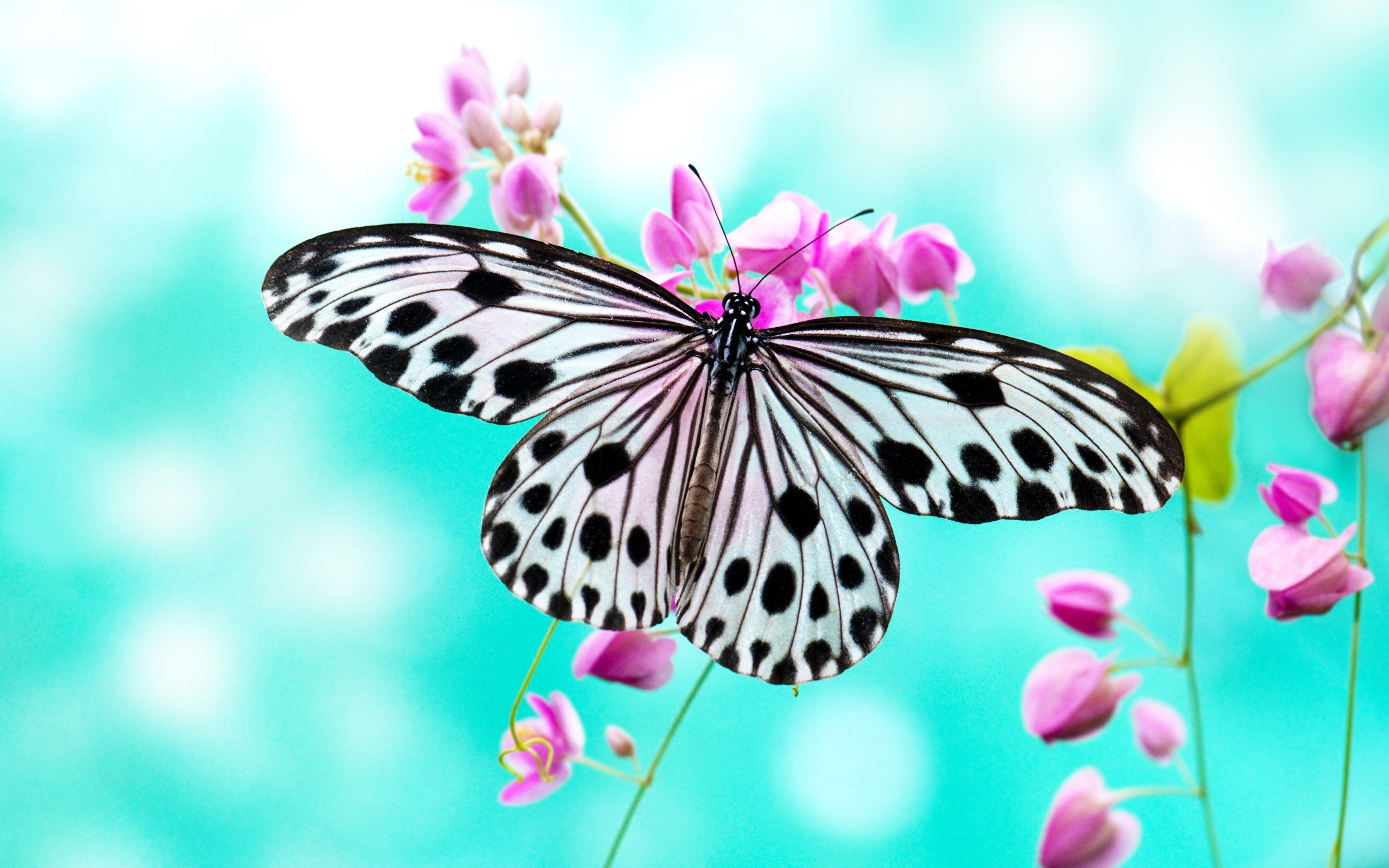butterflies high quality wallpapers