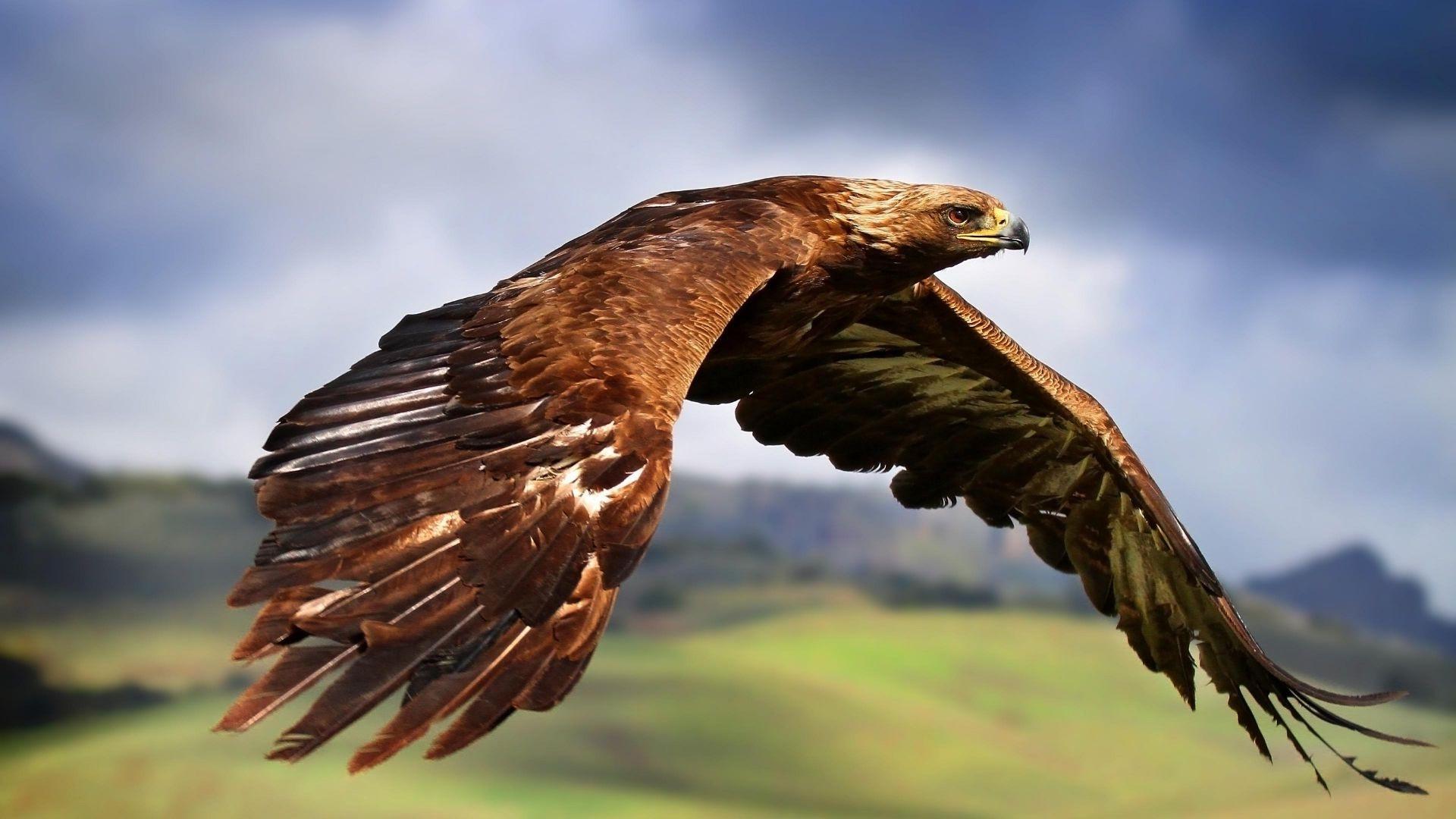 eagle deskto