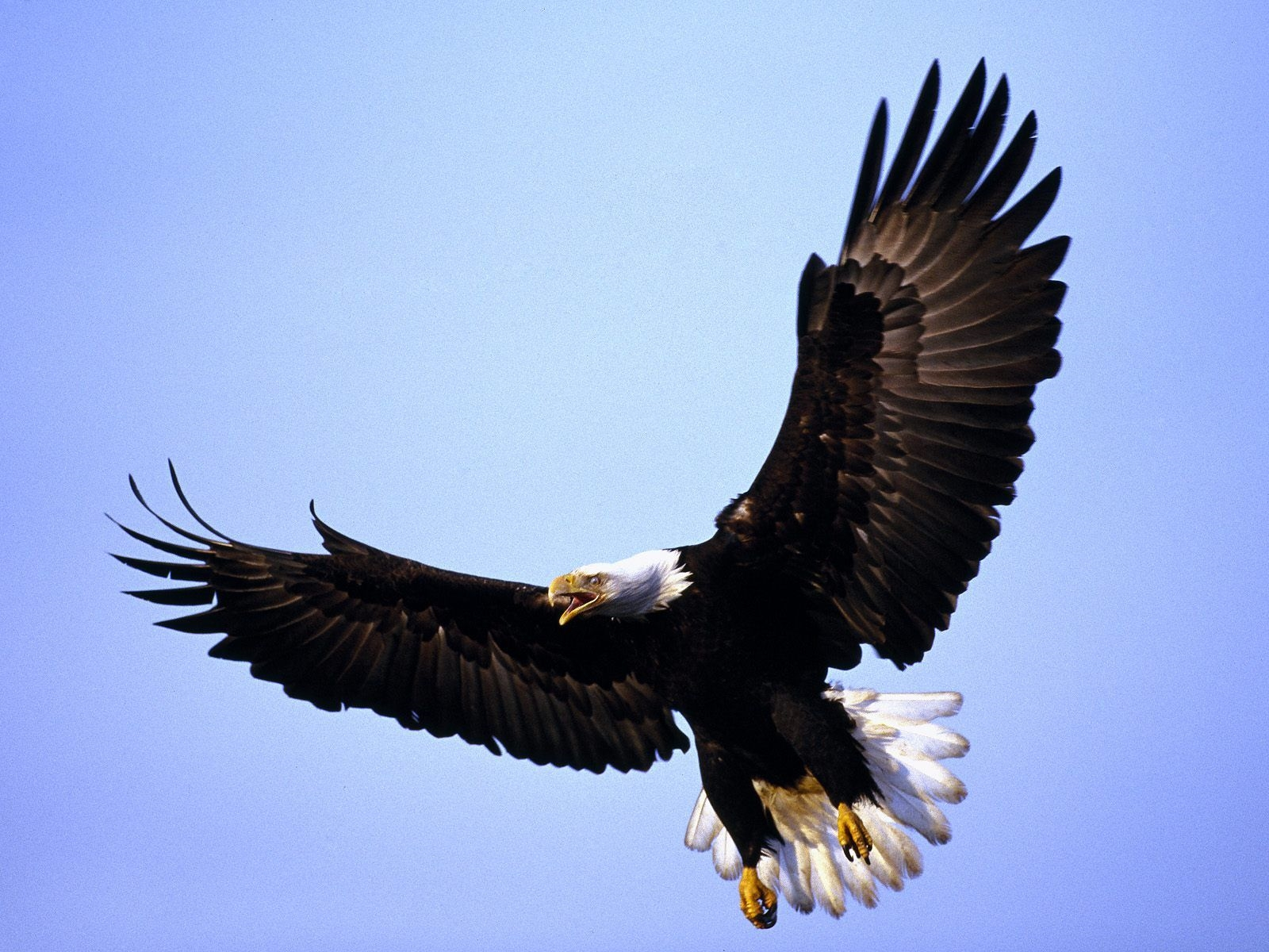 eagle free download