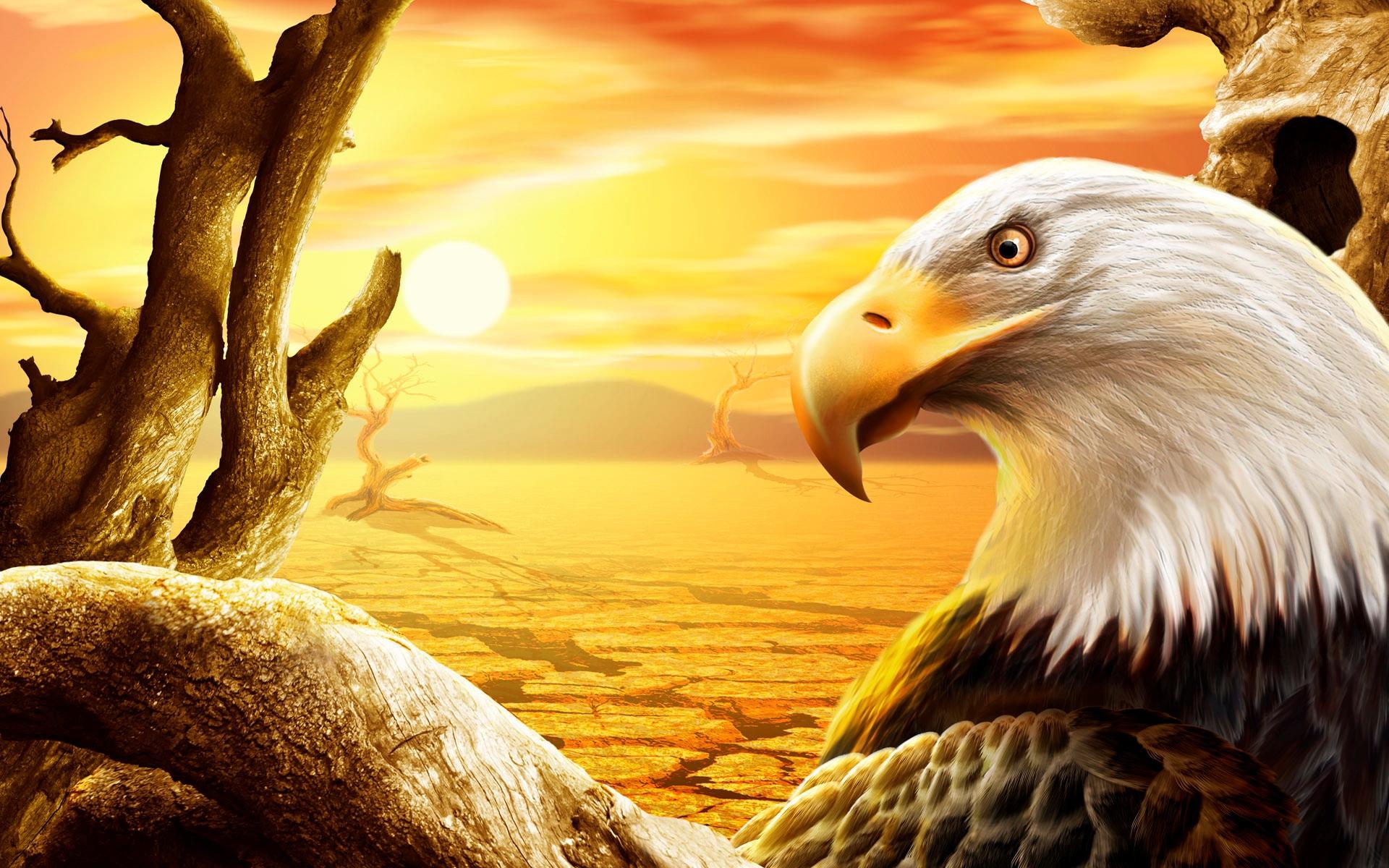 eagle free