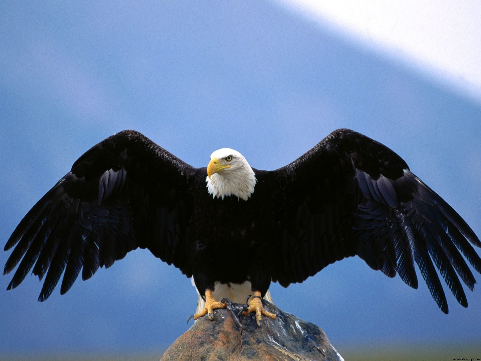 eagle full hd