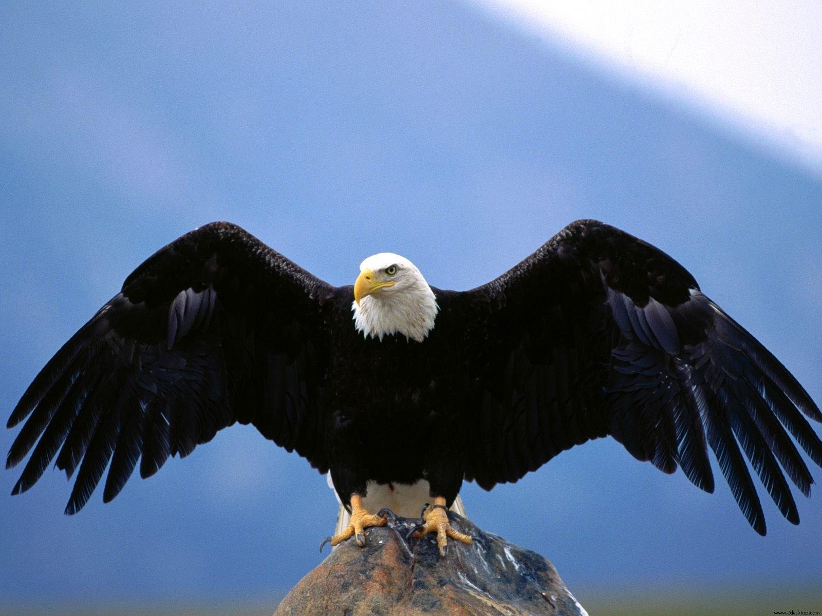 eagle full hd