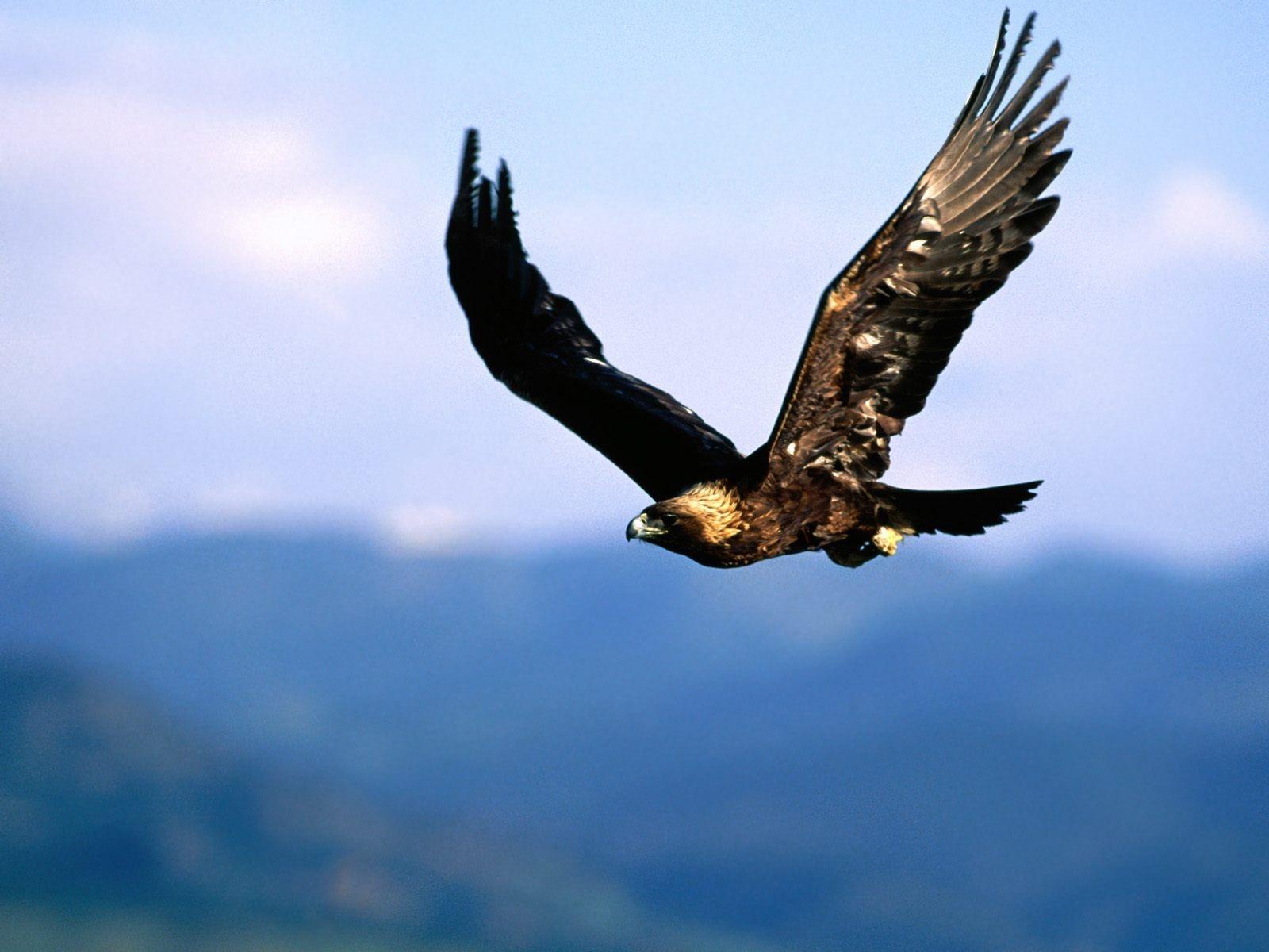 eagle hd photos