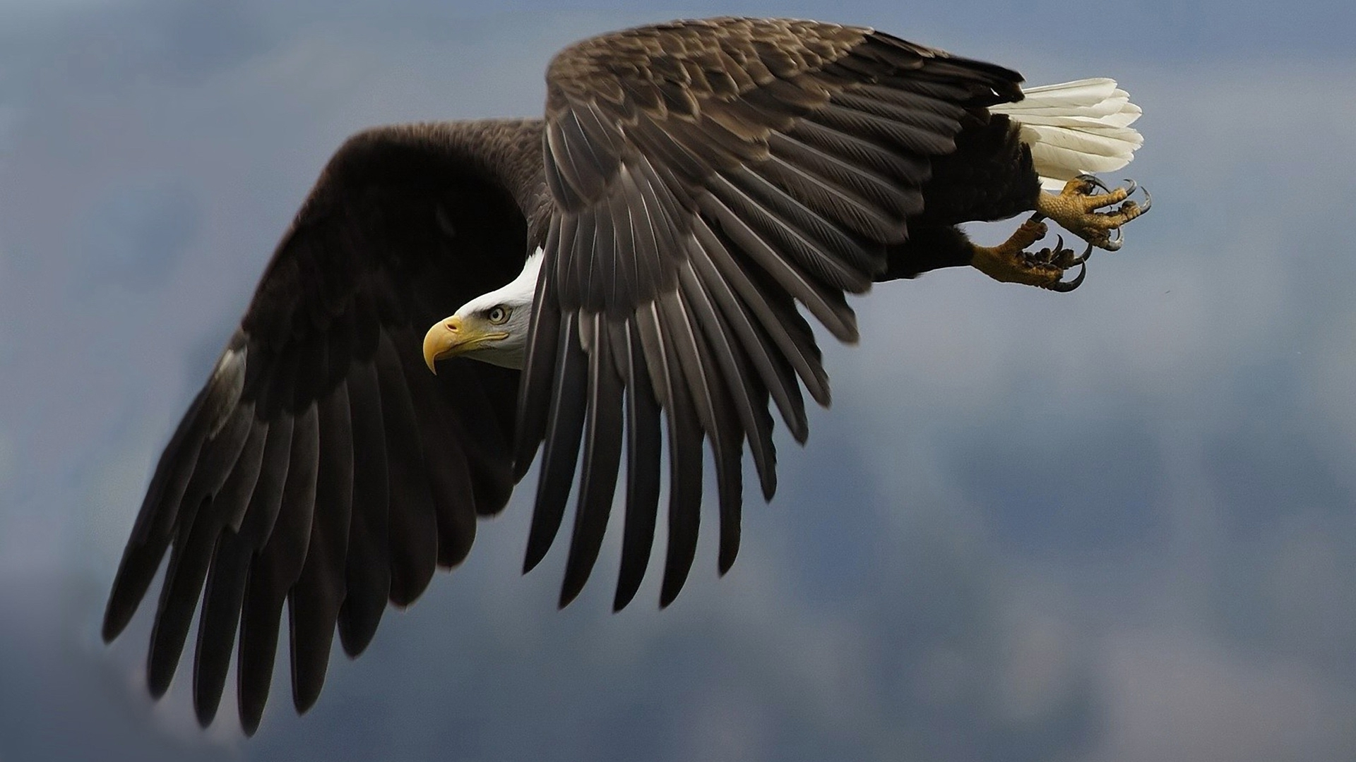 eagle high definition wallpapers