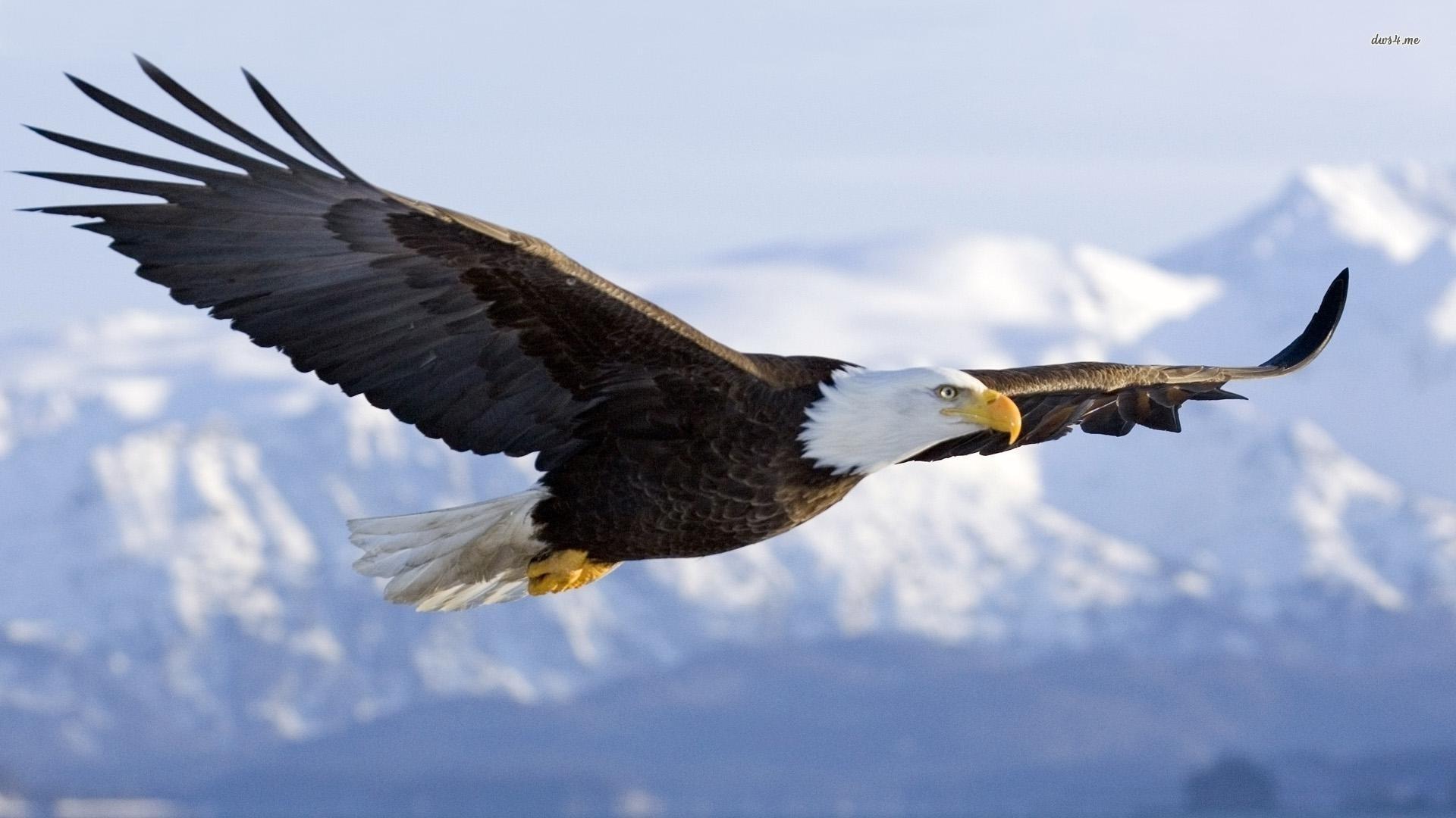 eagle new photos