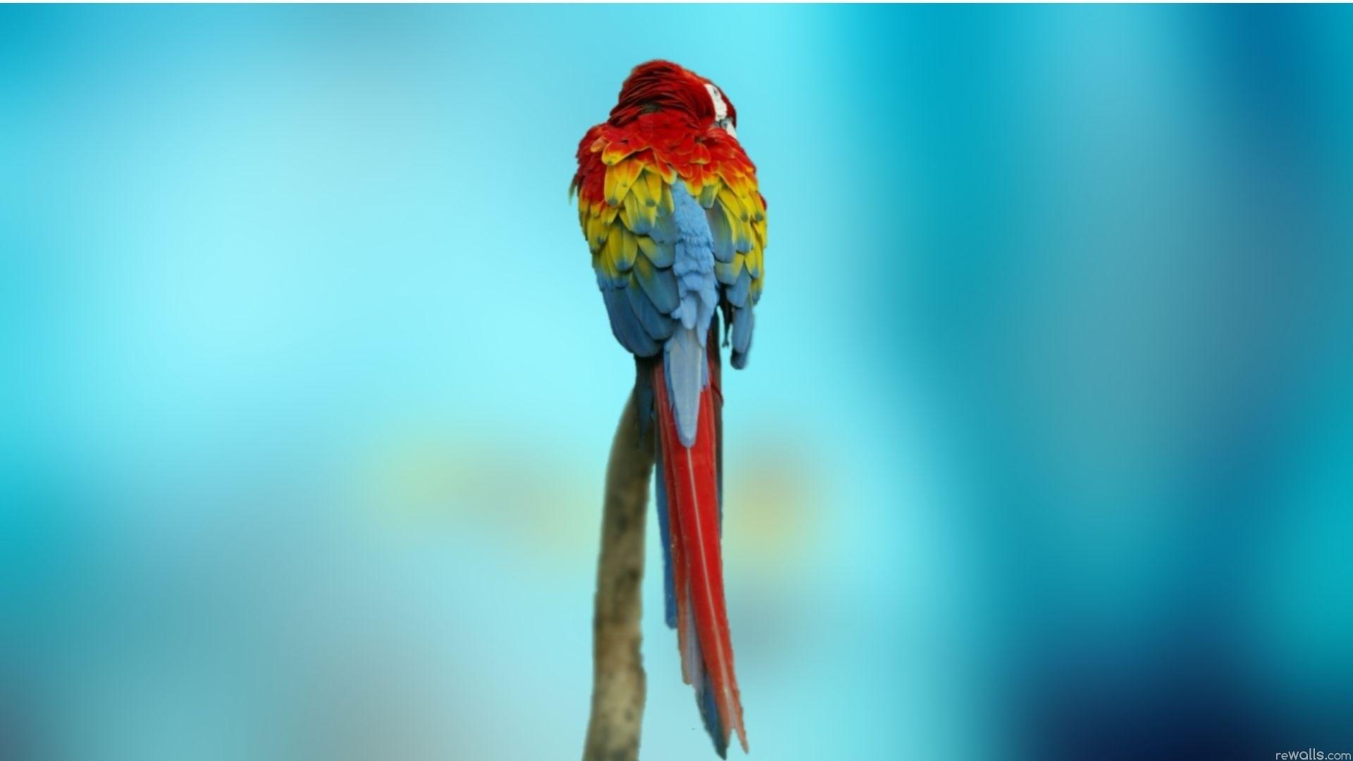 parrot desktop wallpaper