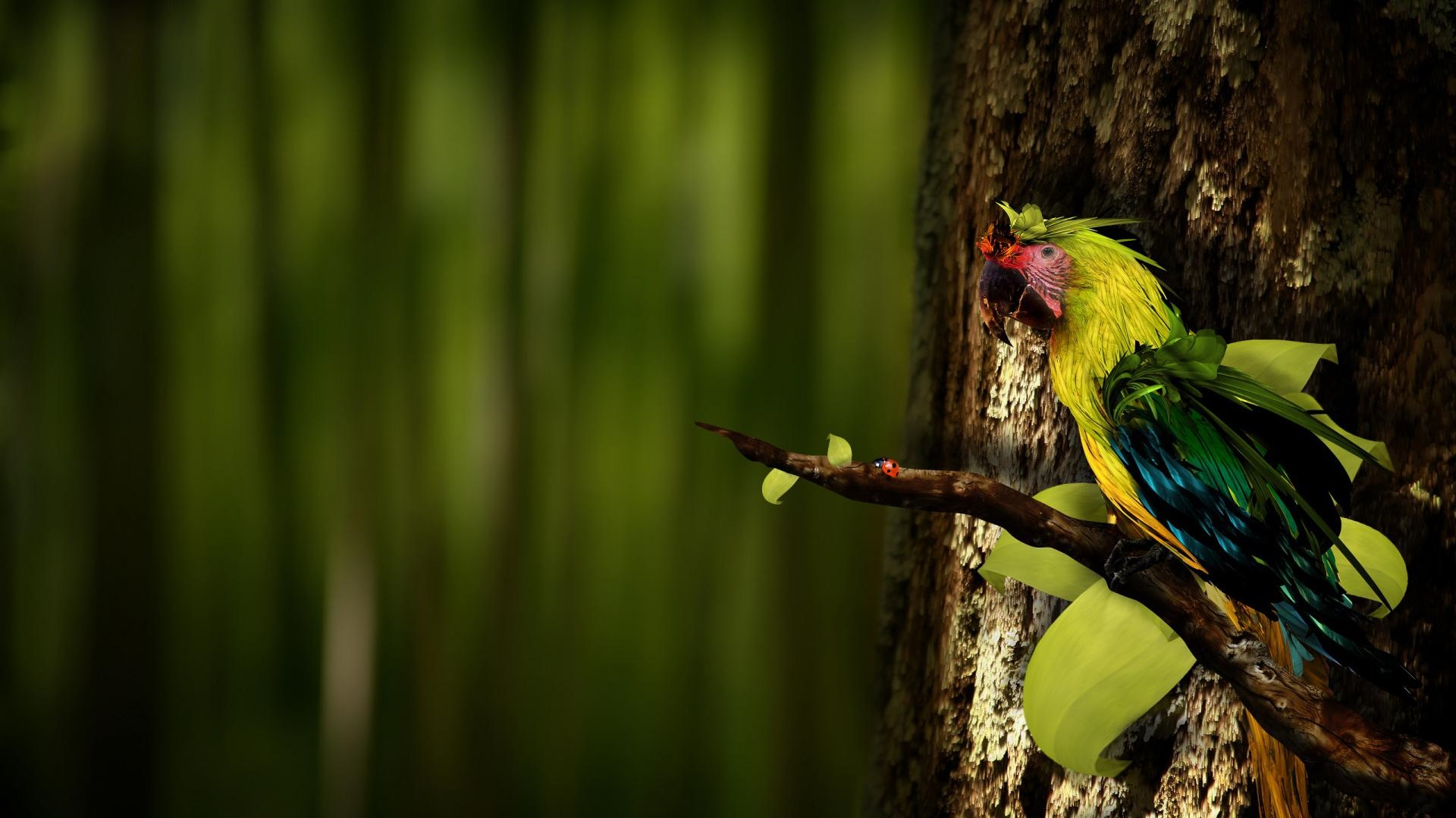 parrot free download