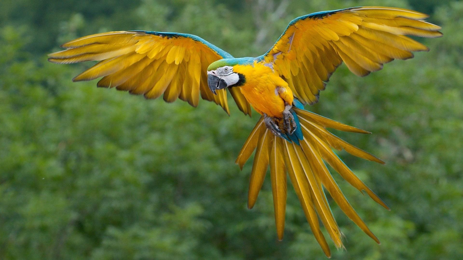parrot free