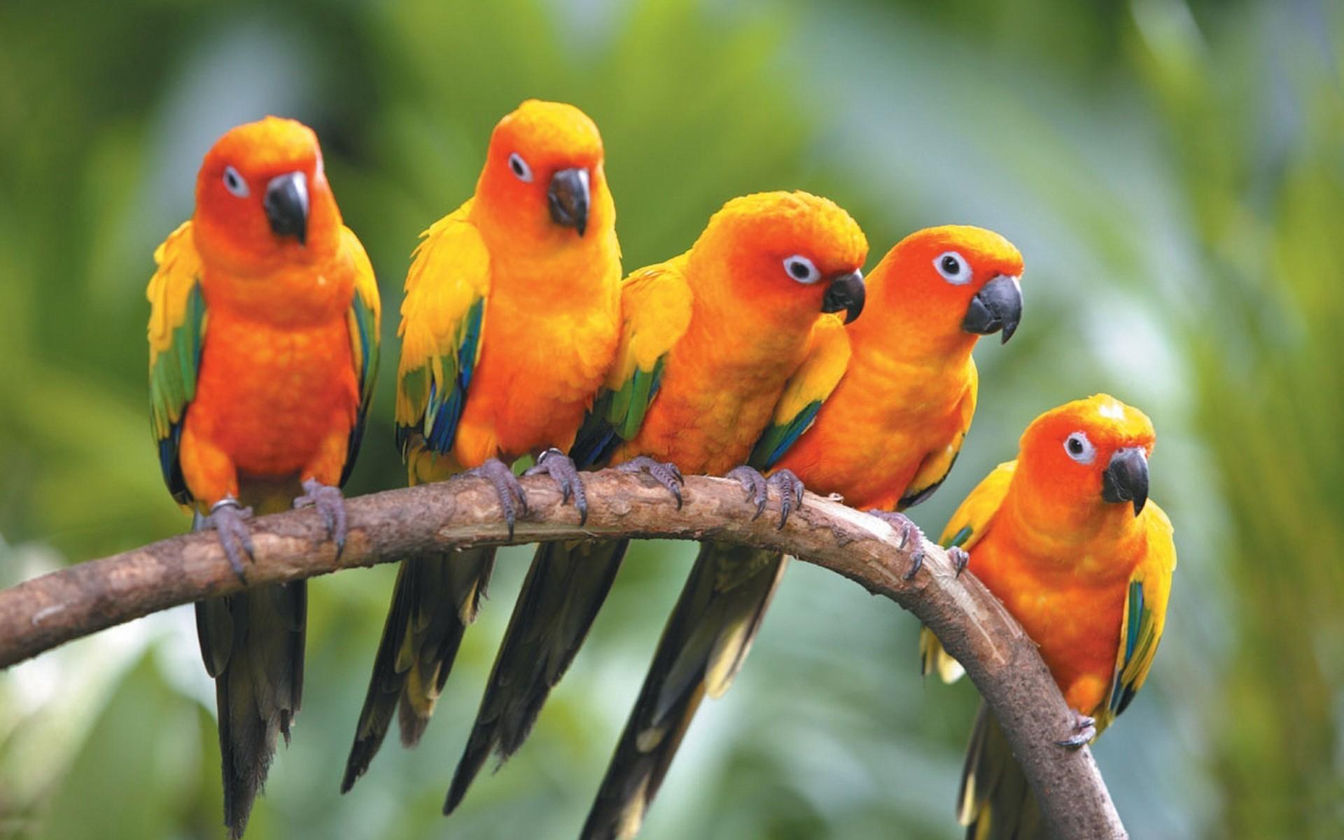 parrot full hd