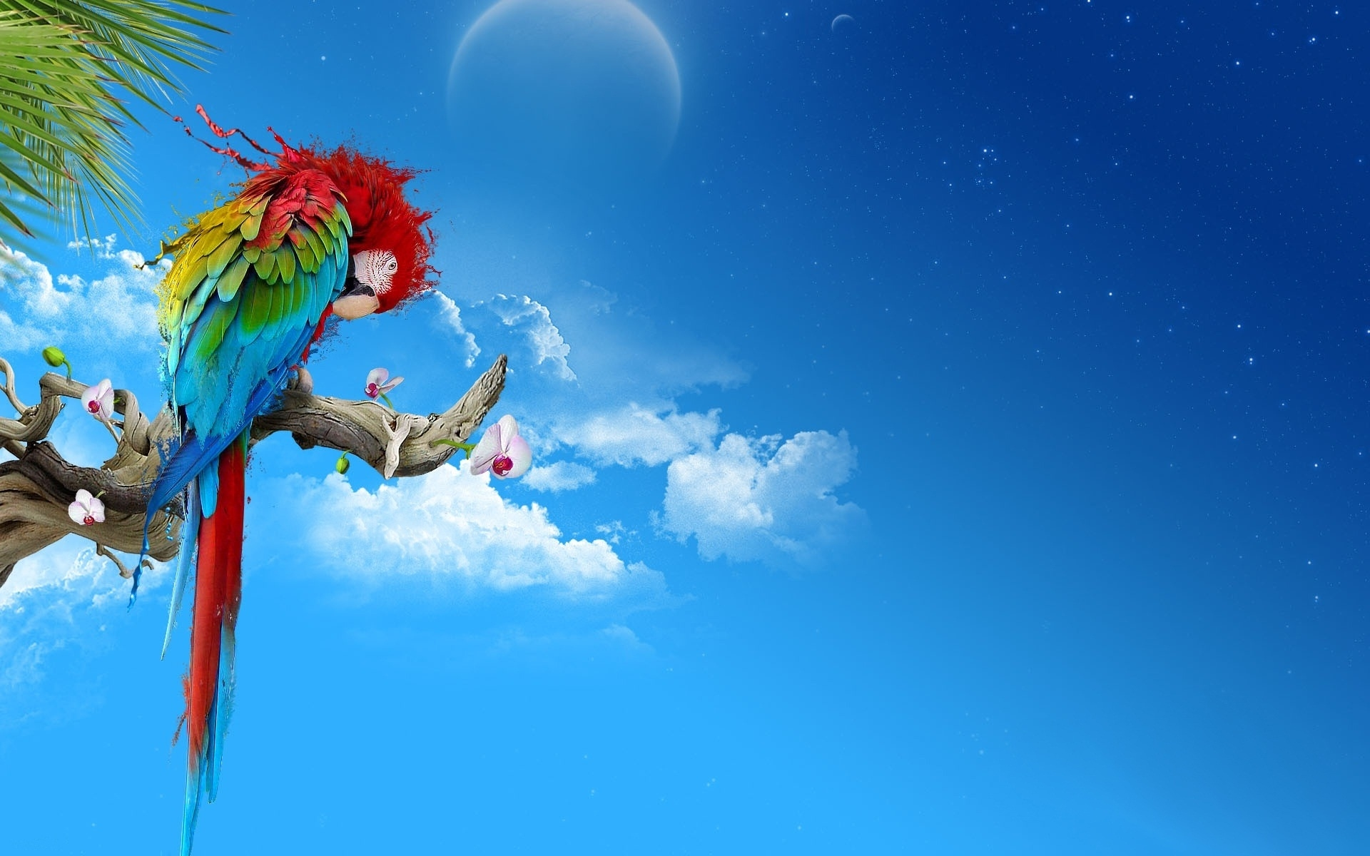 parrot hd background