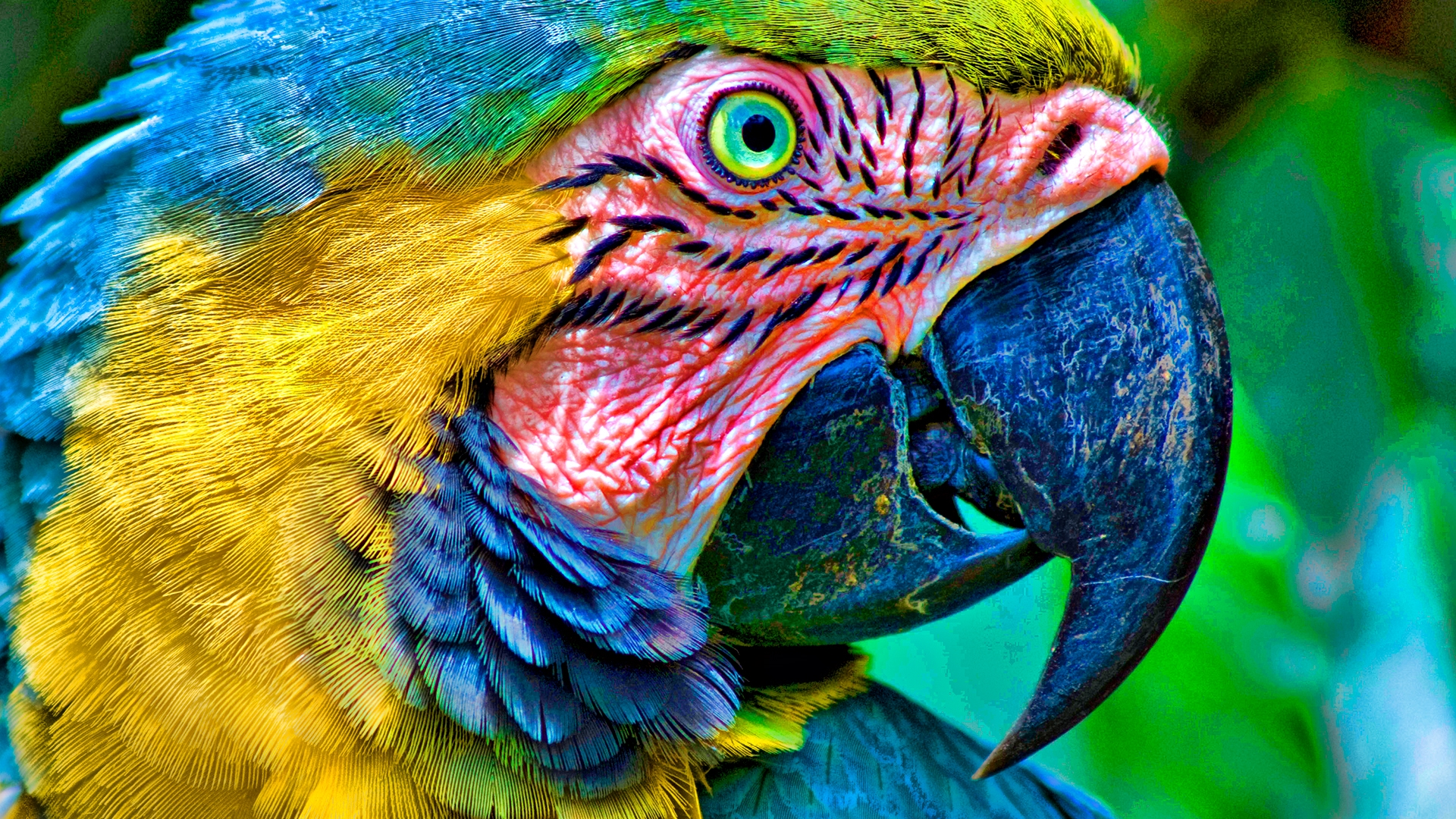 parrot hd deskto