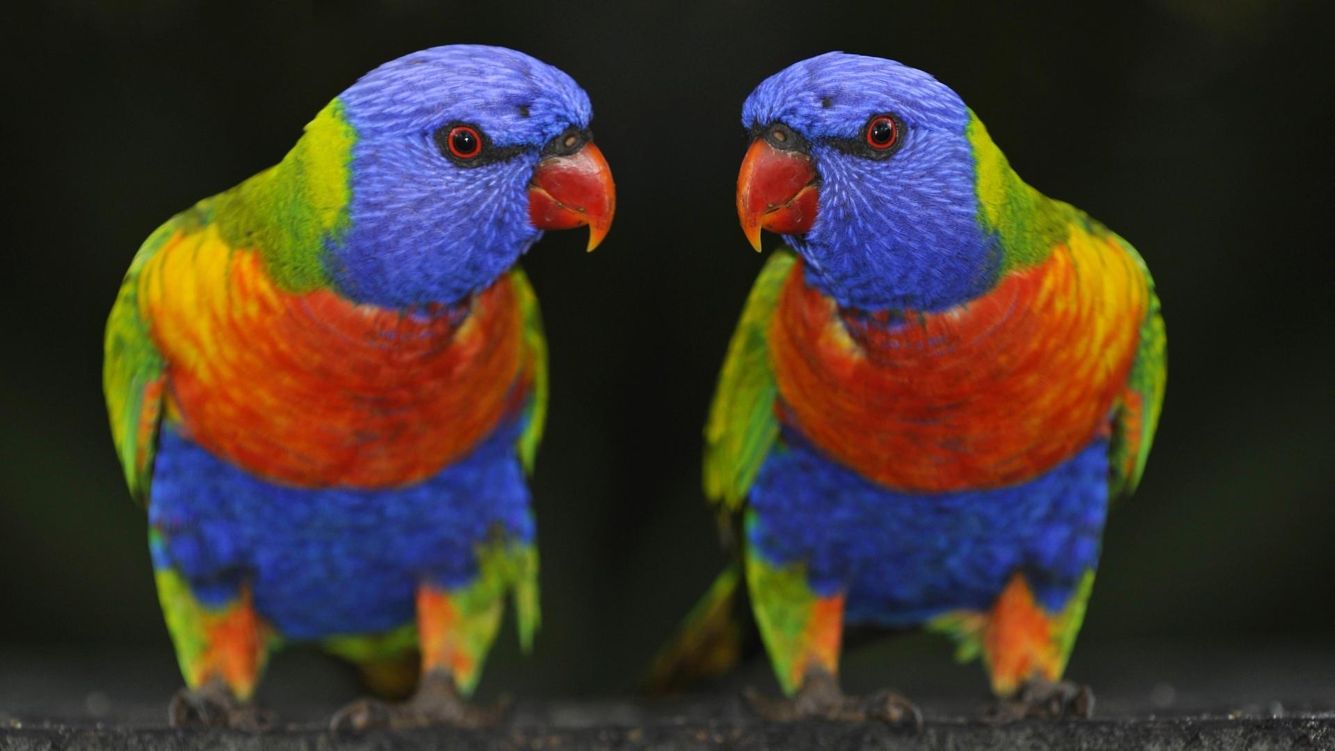 parrot hd pics