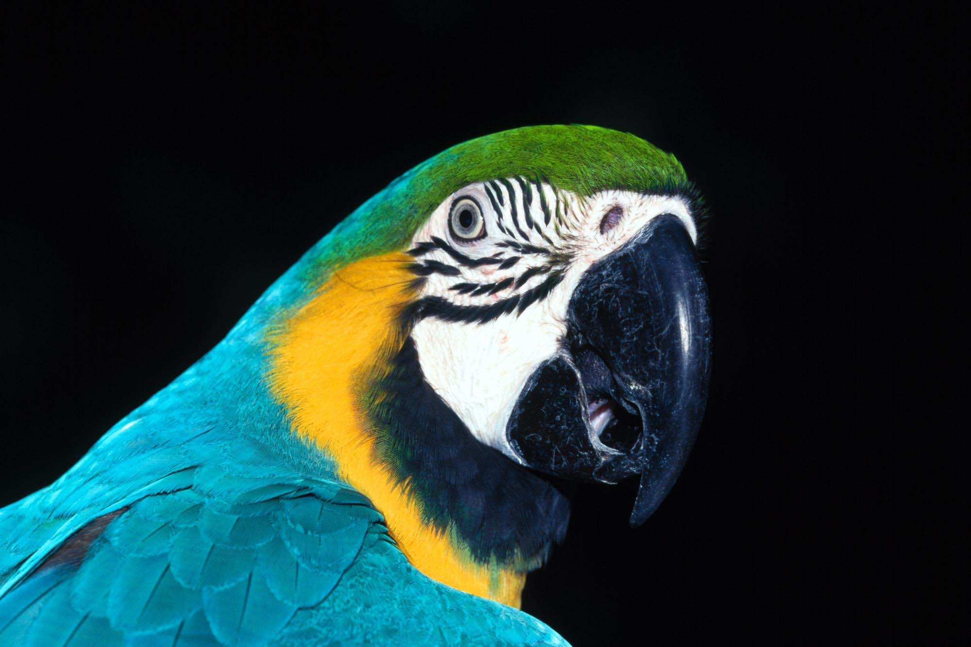 parrot high definition wallpapers