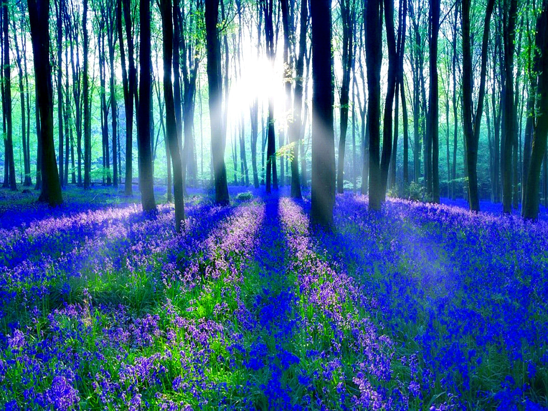 bluebell high definition wallpapers