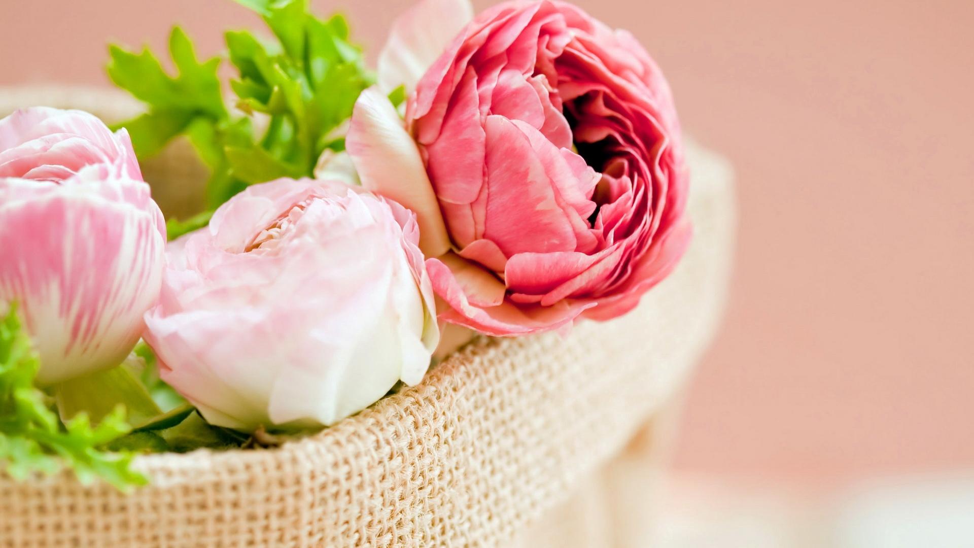 camellias desktop wallpaper
