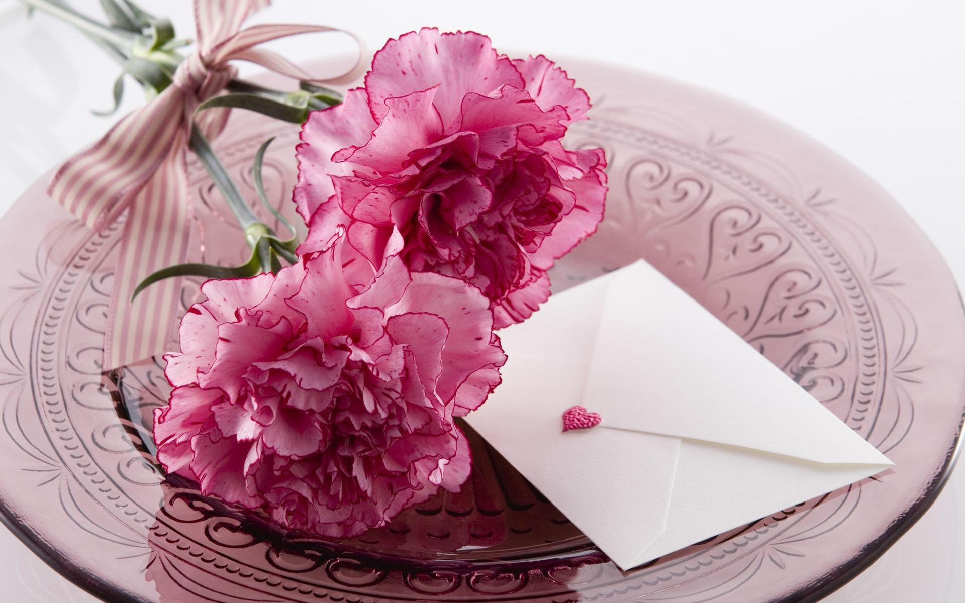 carnation download wallpaper