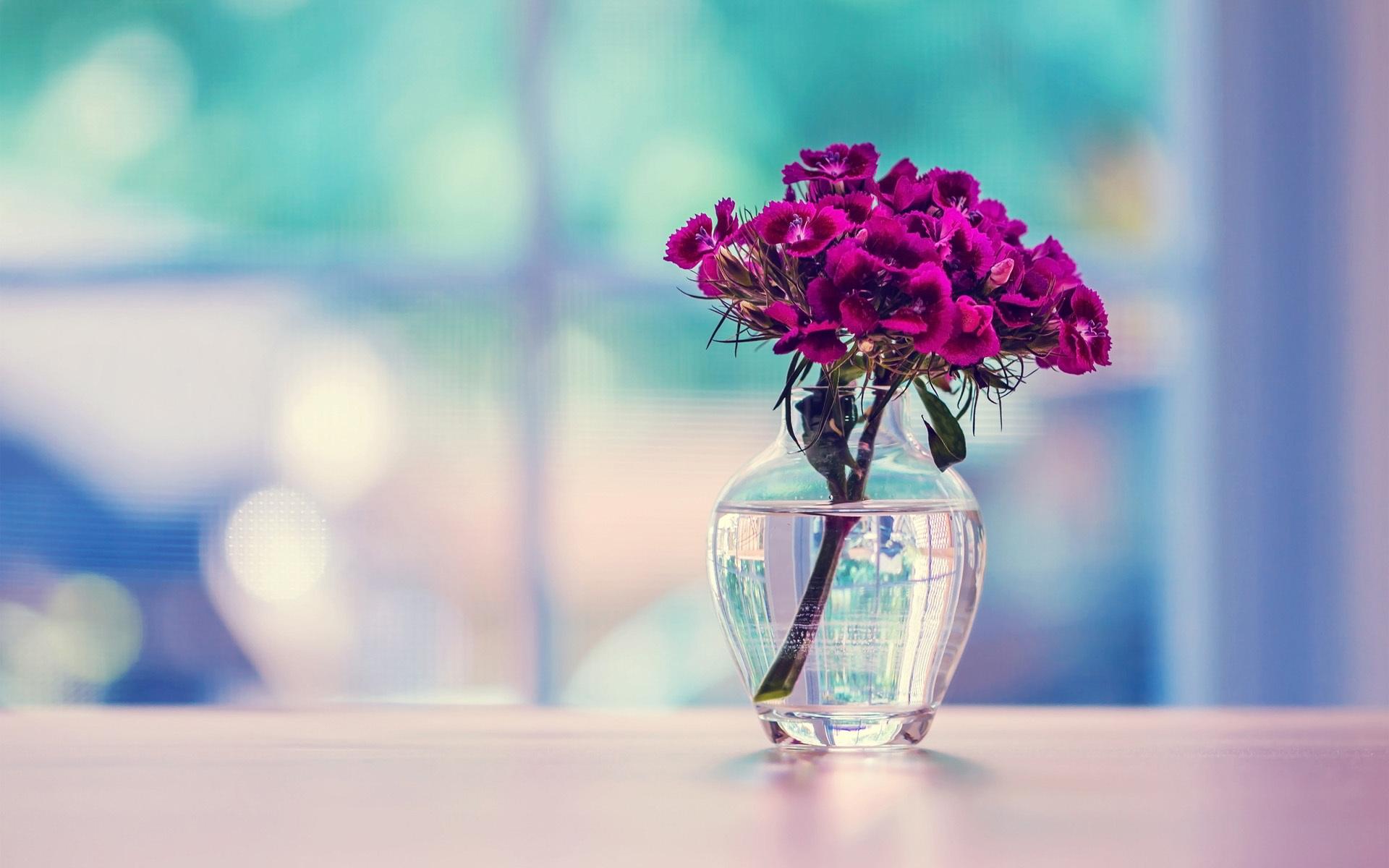 carnation download