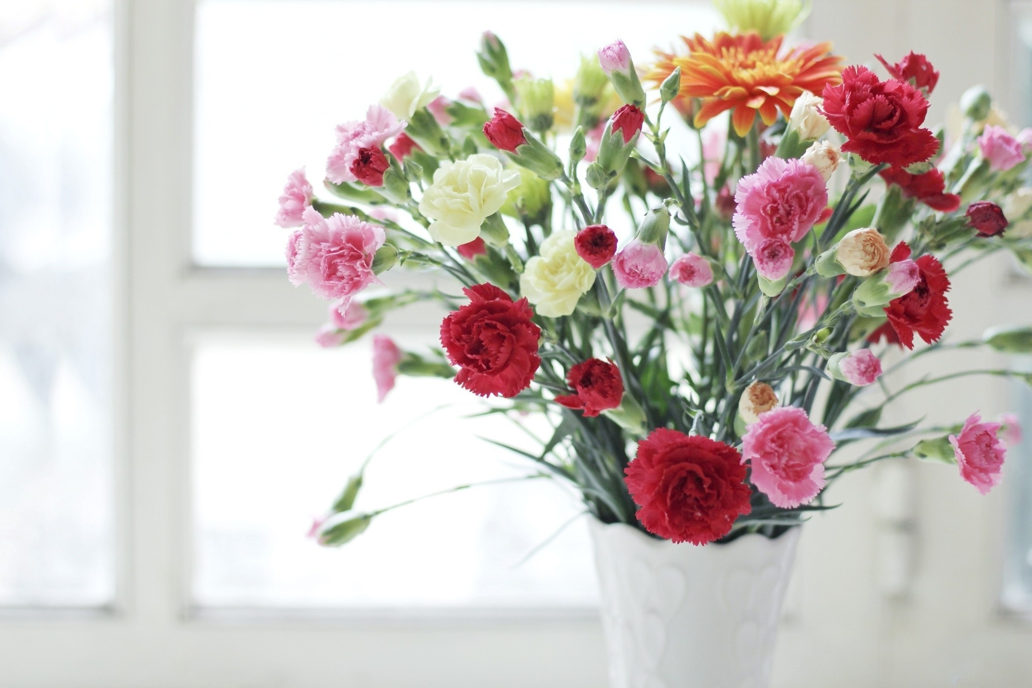 carnation high quality wallpapers